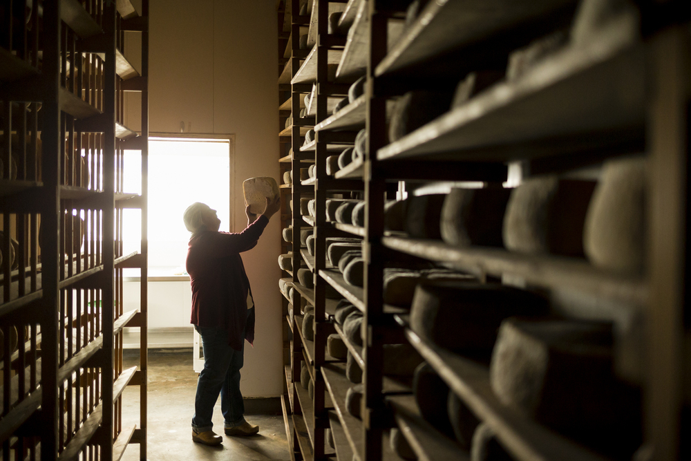 On November 8th, 2015 Donna Pacheco, owner of the Acadinha Cheese Company with her 3rd generation dairy farmer husband Jim, turns cheese in the aging room of their 290-acre Petaluma, CA farm.  The couple is known for their wheels of Capricious goats cheese which is aged 14 months and rubbed in olive oil (wheels of round cheese) and the Broncha, (smooth square and round shapes) which is a goat and cow blend that is aged up to five months.  Both are mold ripened and turned on cypress planks.  They also give ranch tours and cheese classes where guests roll up their sleeves, put on a hairnet and get their hands wet in a vat full of curds and whey.