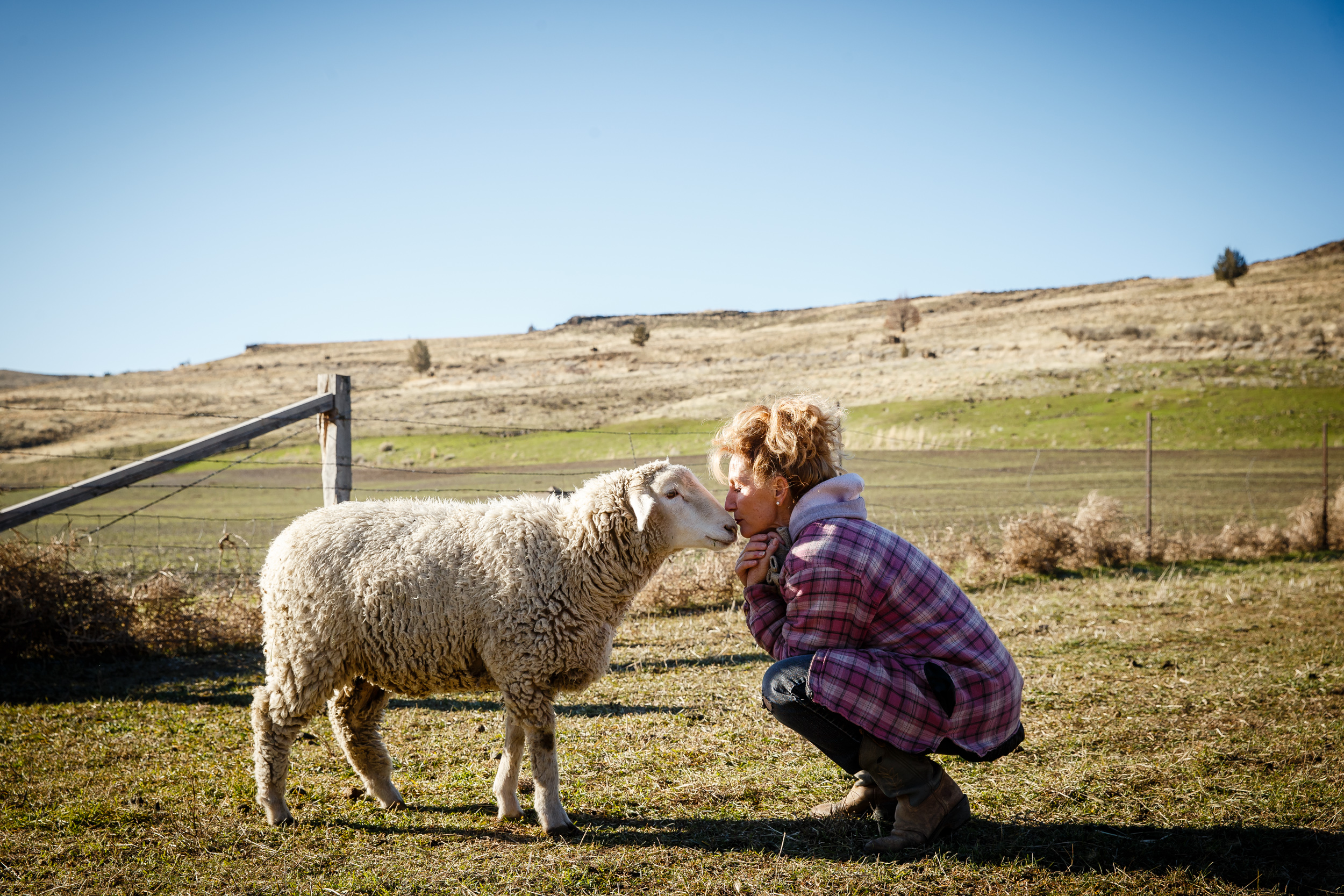 """On Monday, December 14th, 2015 in Shaniko, OR, Jeanne Carver of the 35,000-acre Imperial Stock Ranch greets some of her sheep during a tour with apparel maker Patagonia executives in rural eastern Oregon. Patagonia is looking for new supply chain partners as it recovers from an exposé of widespread animal cruelty at the company's wool supplier. Established in 1871, the Imperial Stock Ranch has been rasing sheep and cattle for 145 years and is the only ranch in Oregon designated a National Historic District that is still in operation.  Under the Carver's land mangement practices, the ranch is recognized as a model of sustainable agriculture. """"CREDIT: Leah Nash for The Wall Street Journal"""" SLUG: PATAGONIA"""