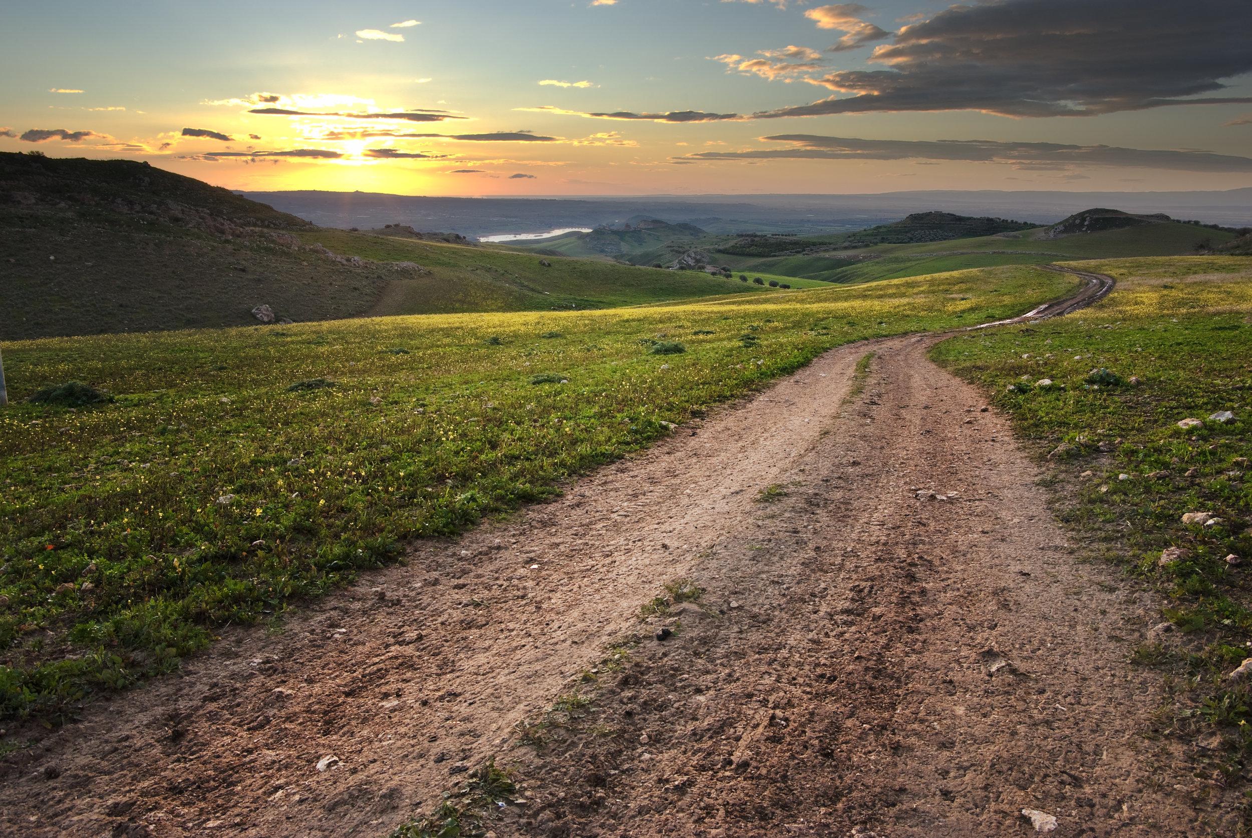 Dirt Road In Meadow At Daybreak