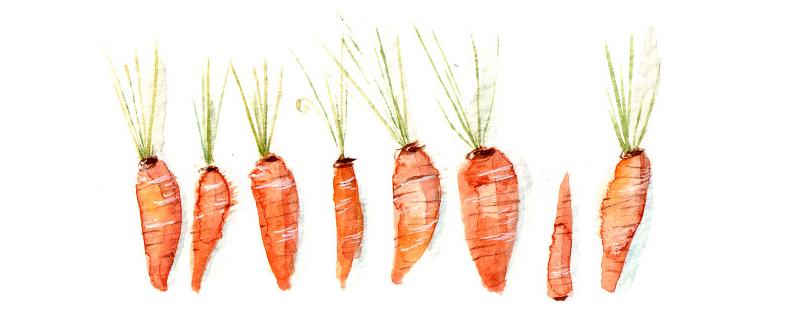 Lucy-Eldridges-Illustrated-Recipe-for-Carrot-Cake-detail