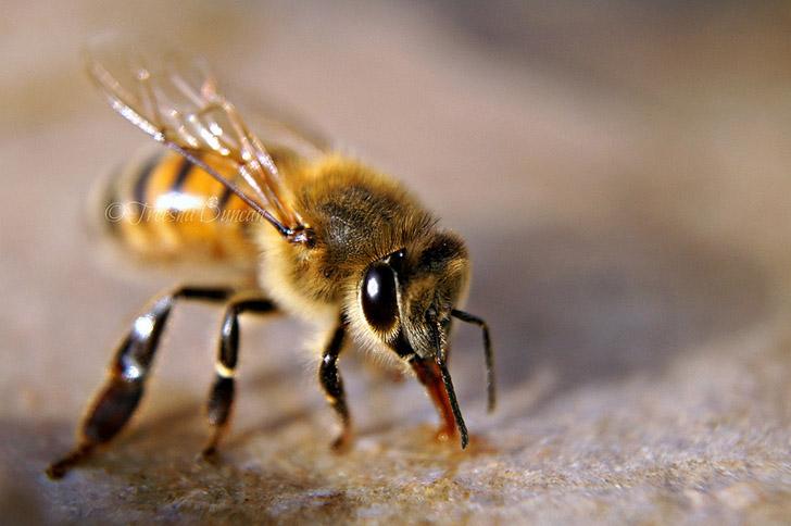 bees-Treesha-Duncan1