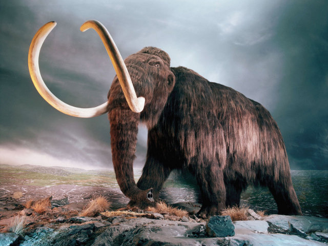 cloneable-wooly-mammoth