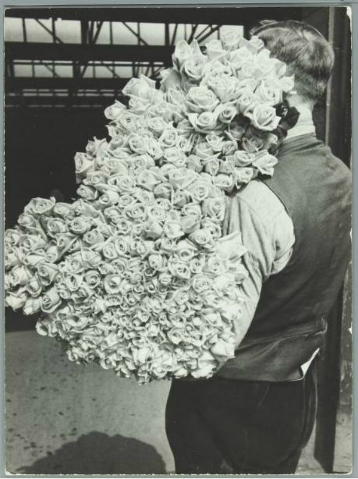 tulipan - 1.jpg