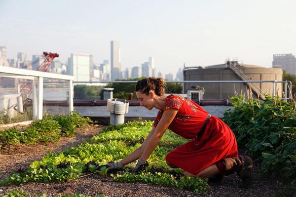 http://semidomesticated.com/2011/04/city-farmers/