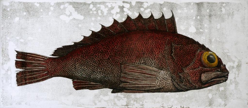 'Deep Sea Perch'