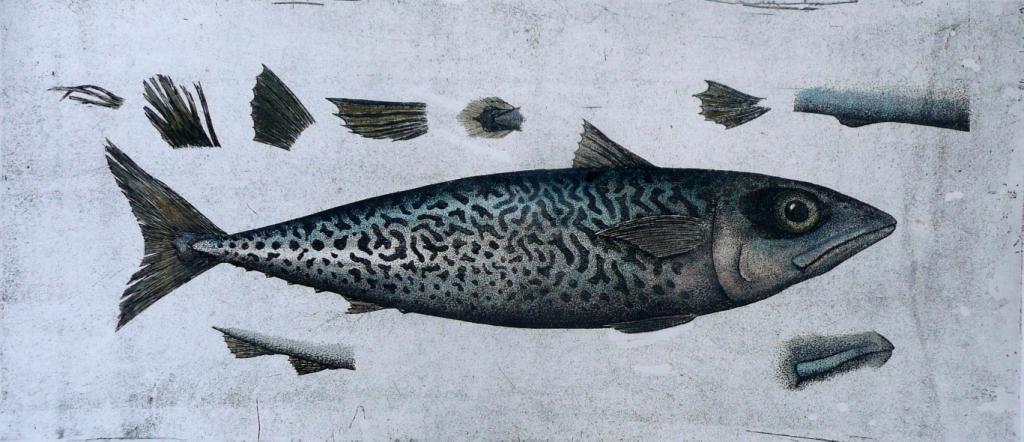 'Mackerel'