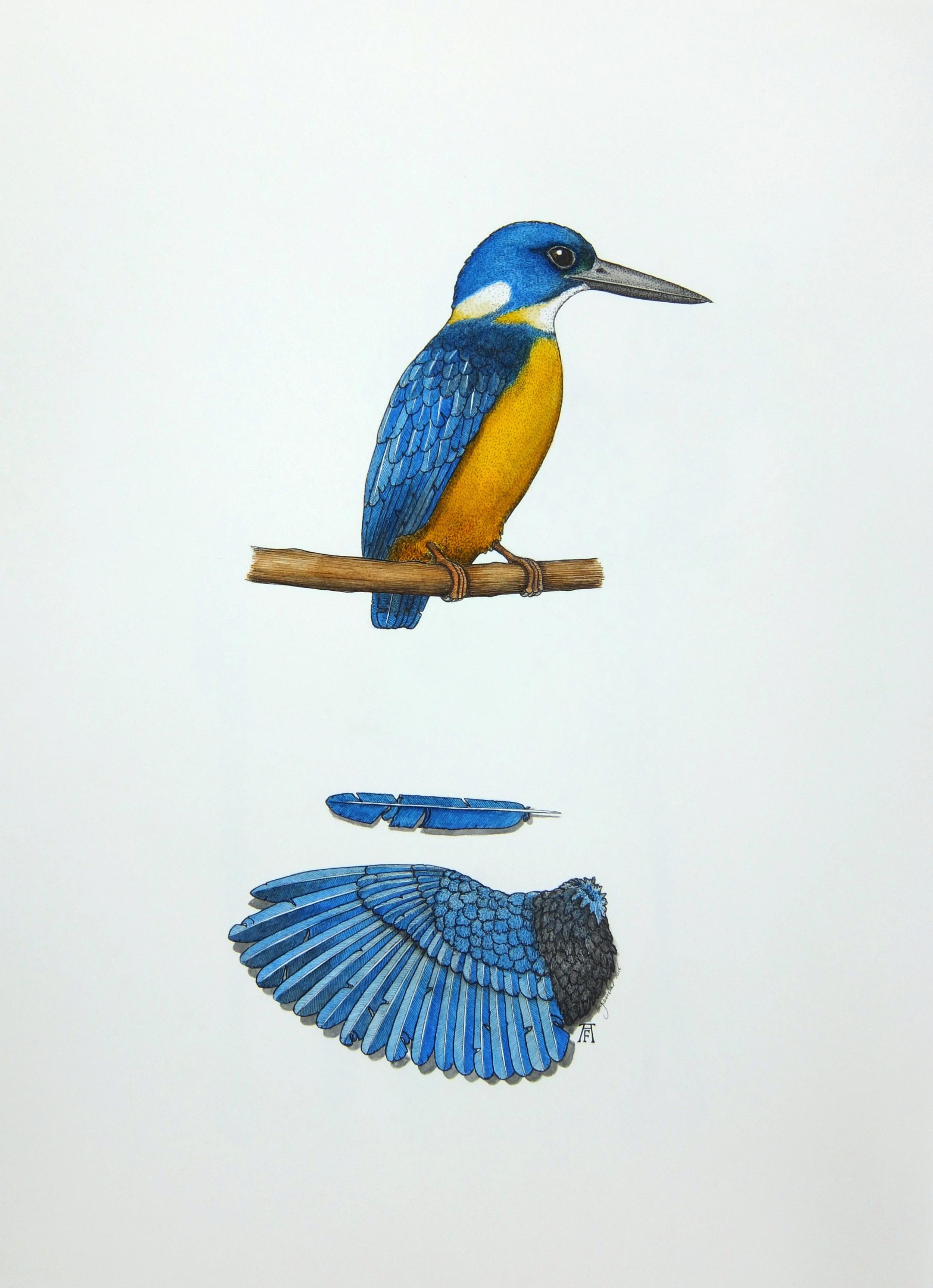 'Azure Kingfisher'