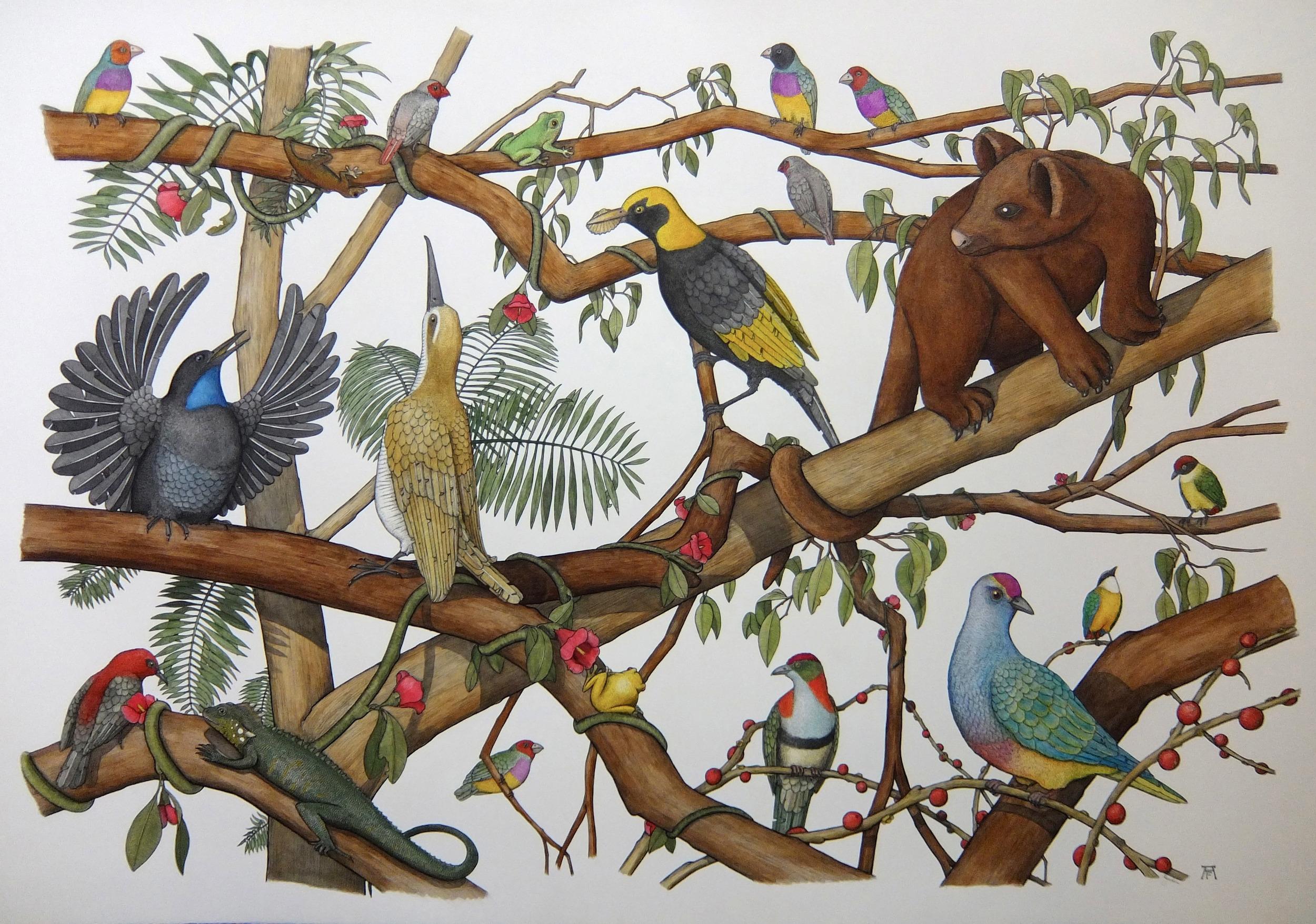 'The Daintree Rainforrest'