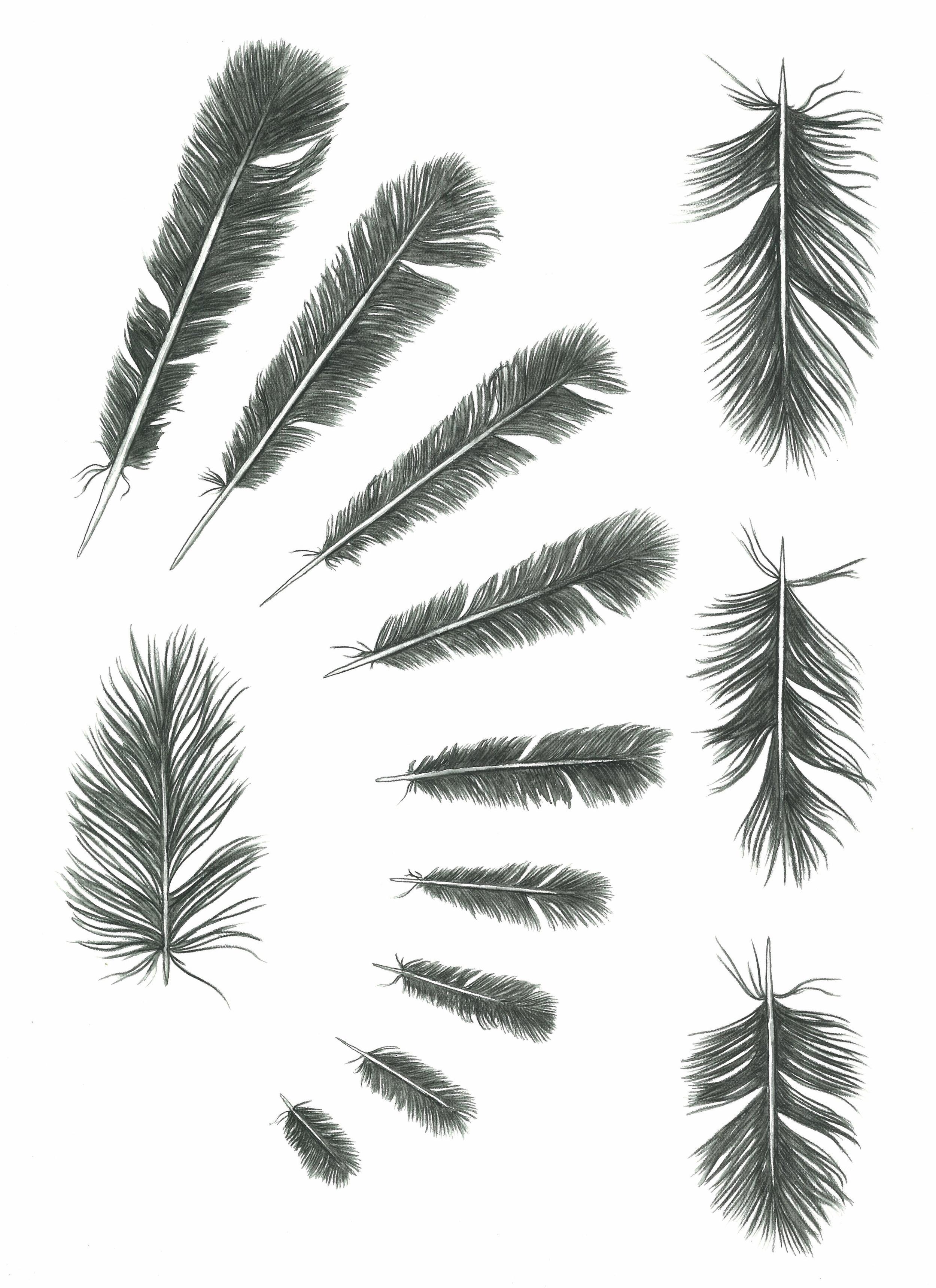 'Feather Studies #3'
