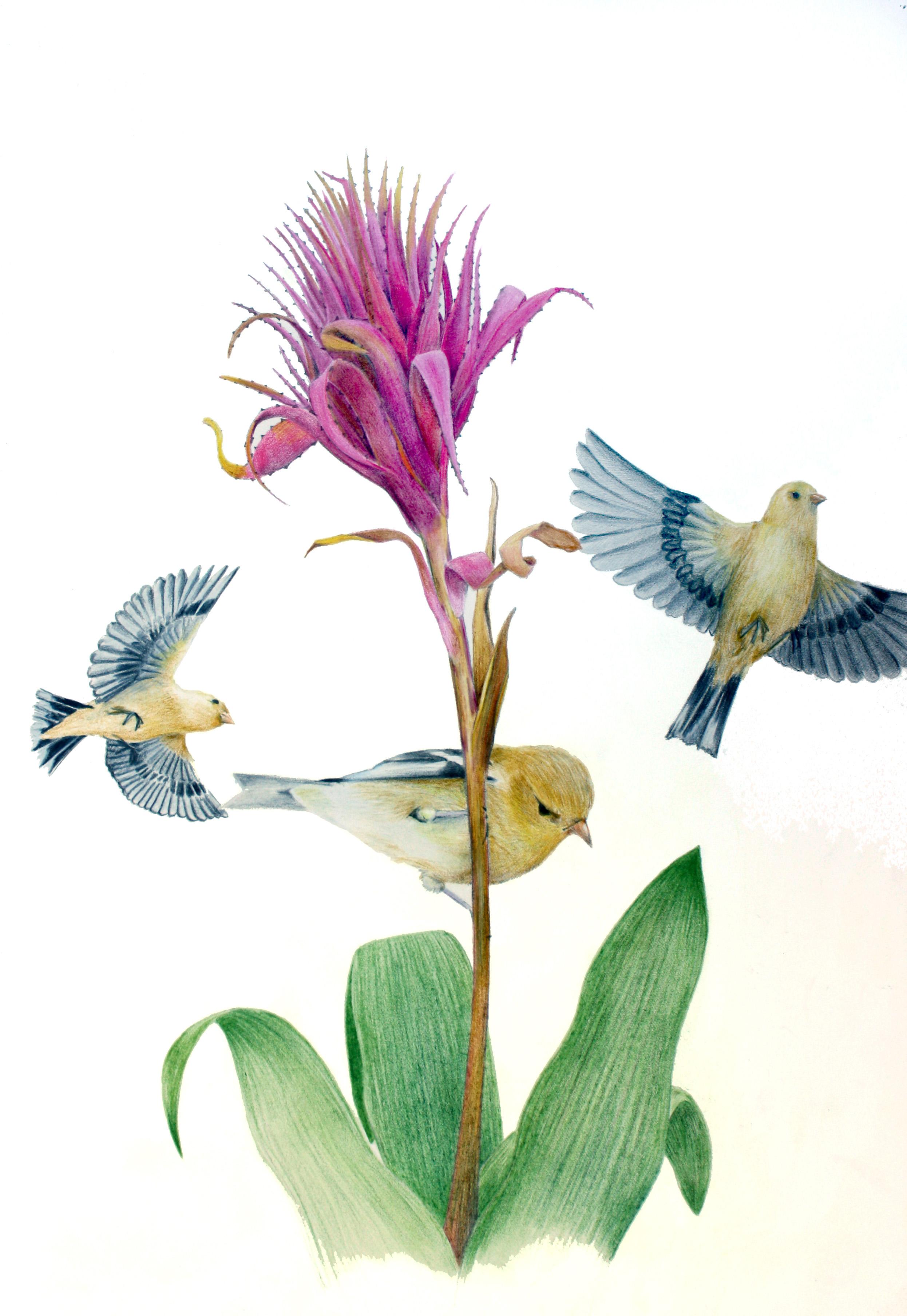 'Finch on Bromeliad'