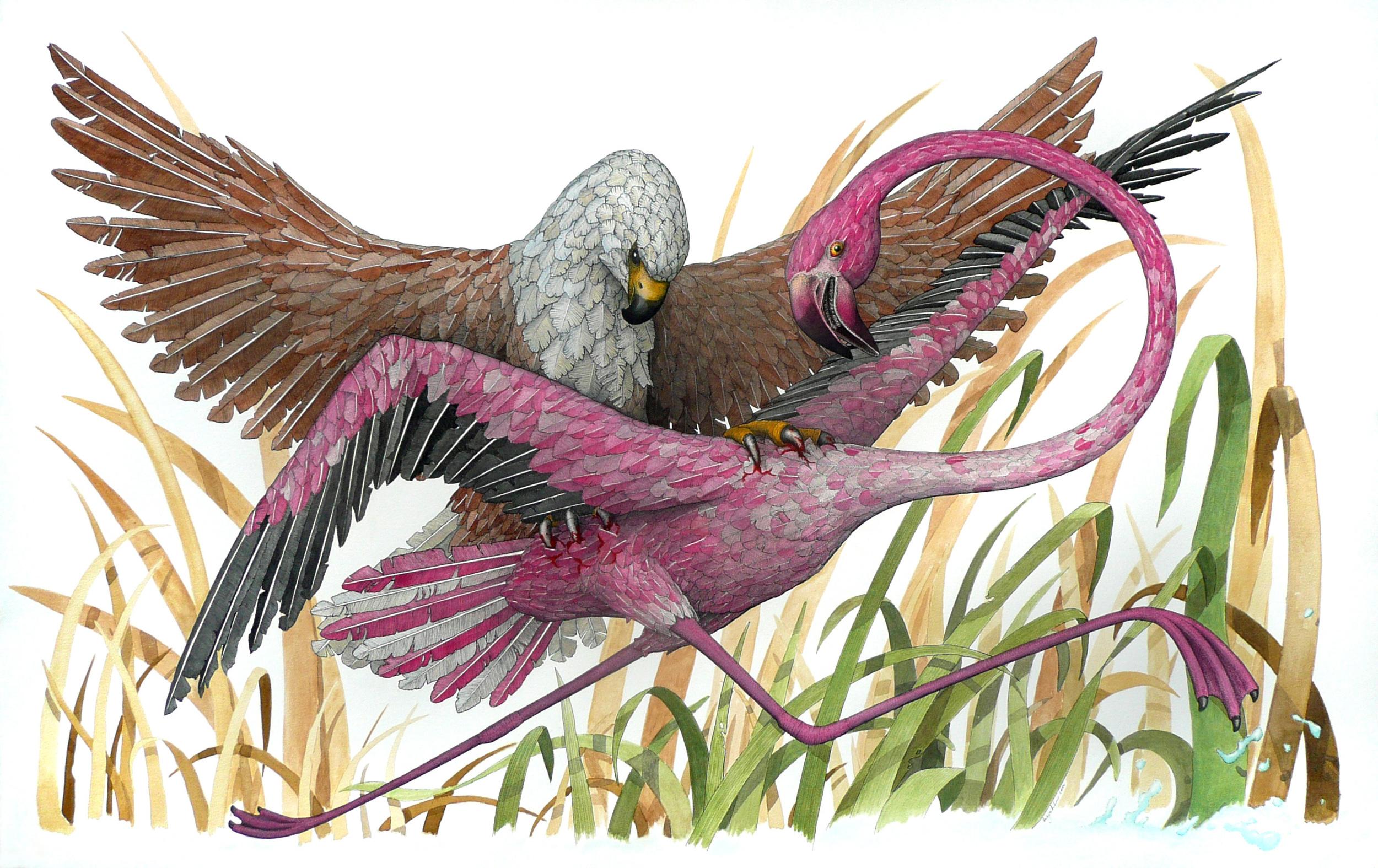 'Flamingo and Fish Eagle'
