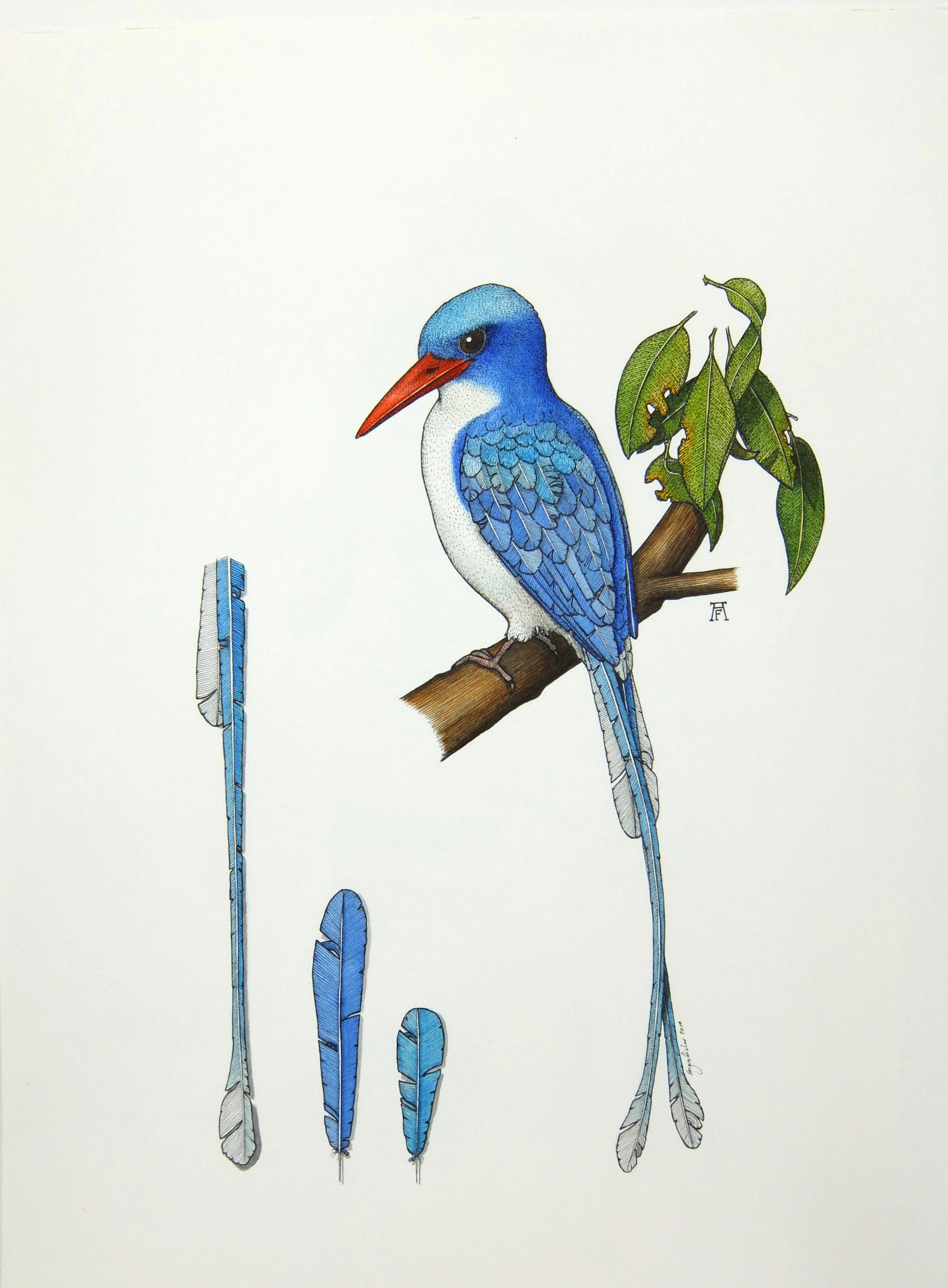 'Paradise Kingfisher'