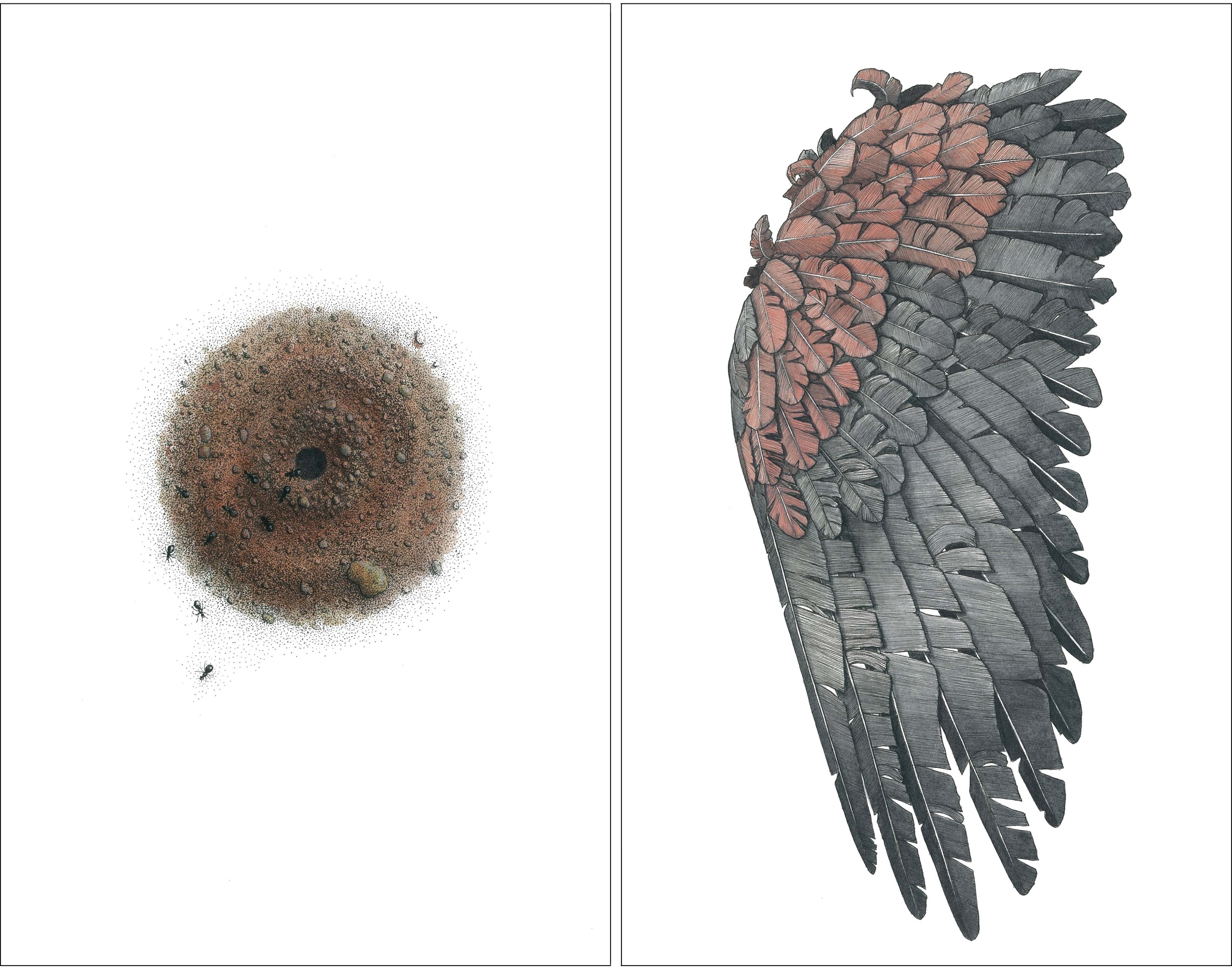 'Ant Nest' + 'Cockatoo Wing'