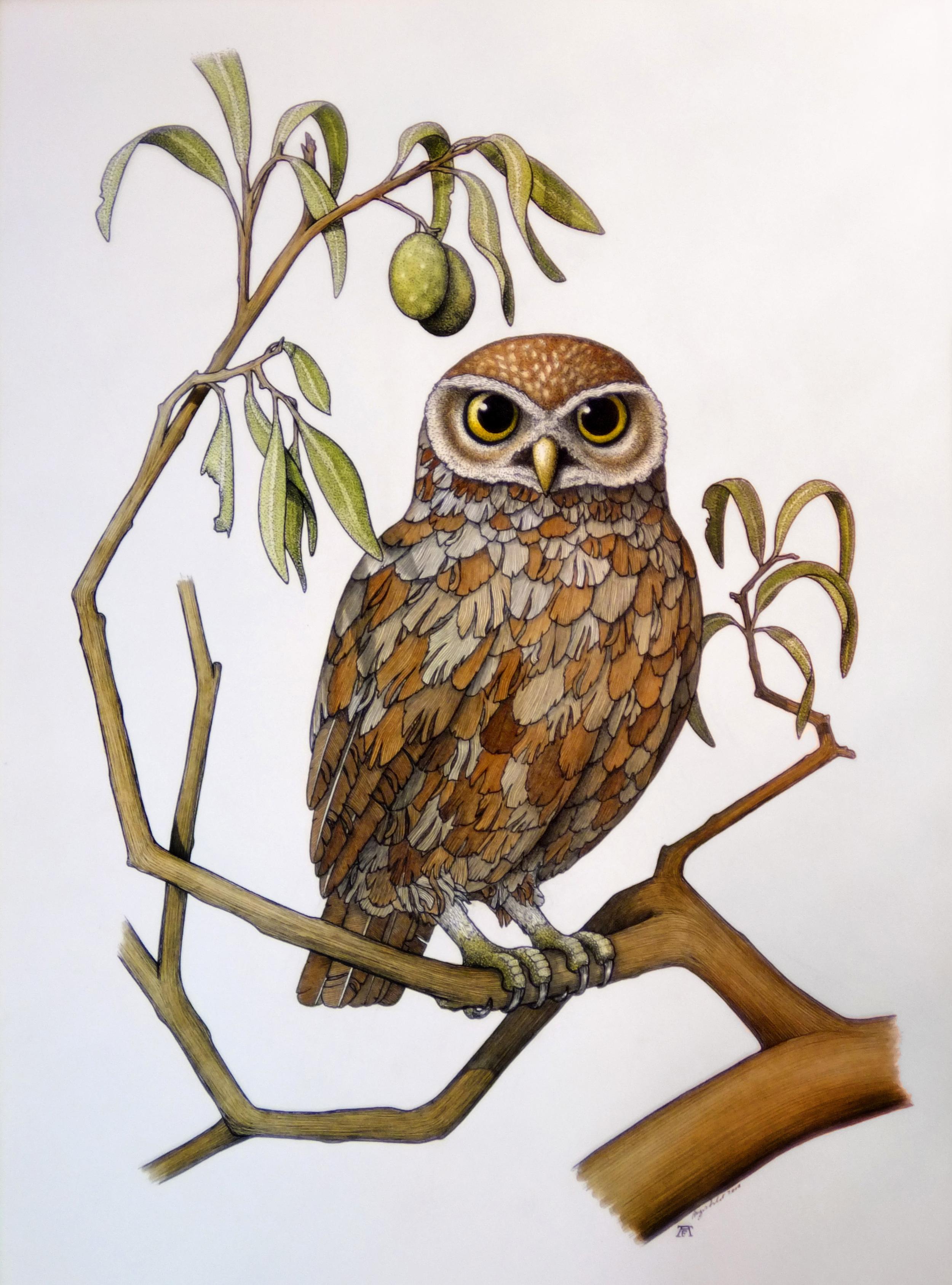 'Owl of Athena'