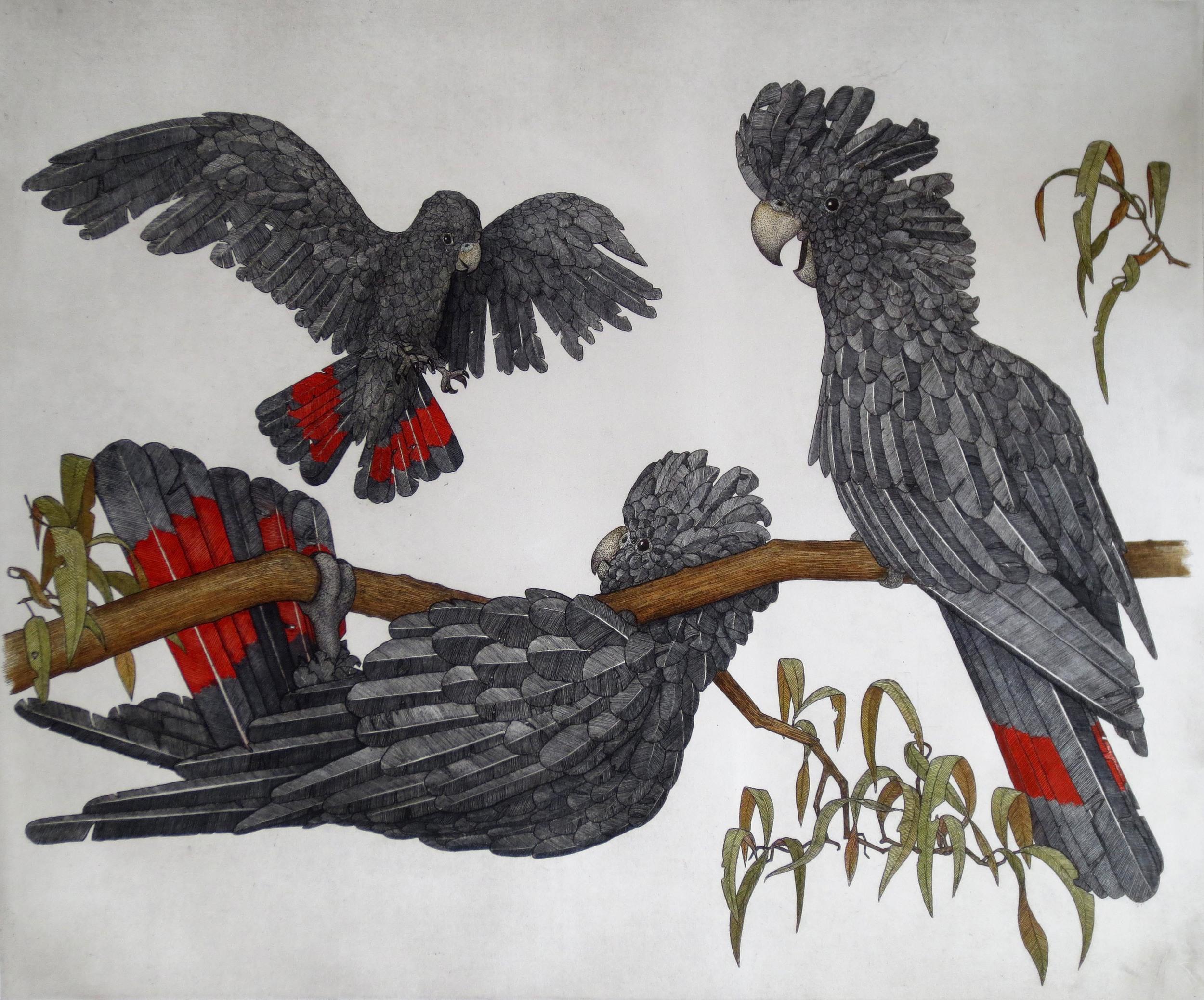 'Black Cockatoos'