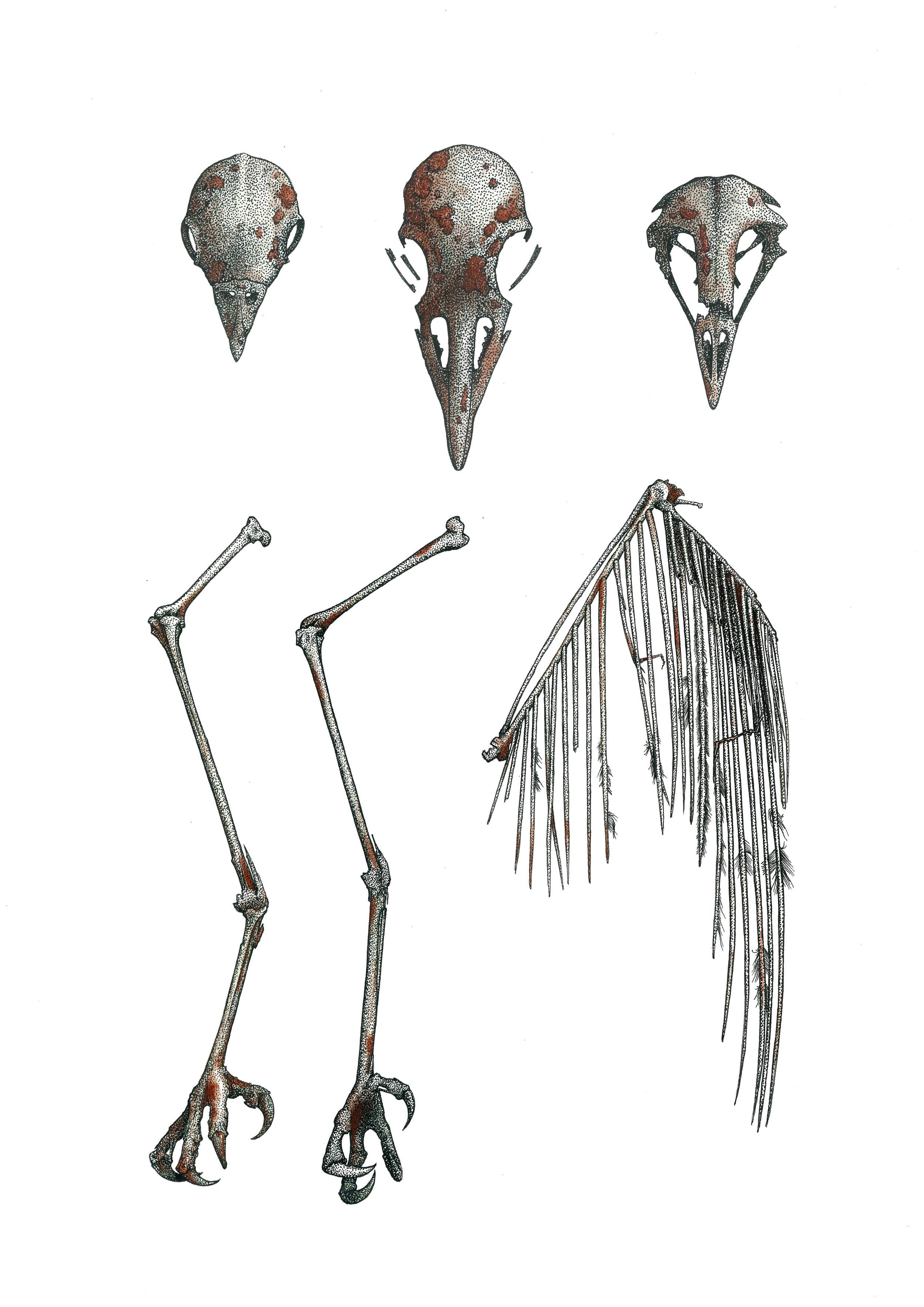 'Bird Remains'