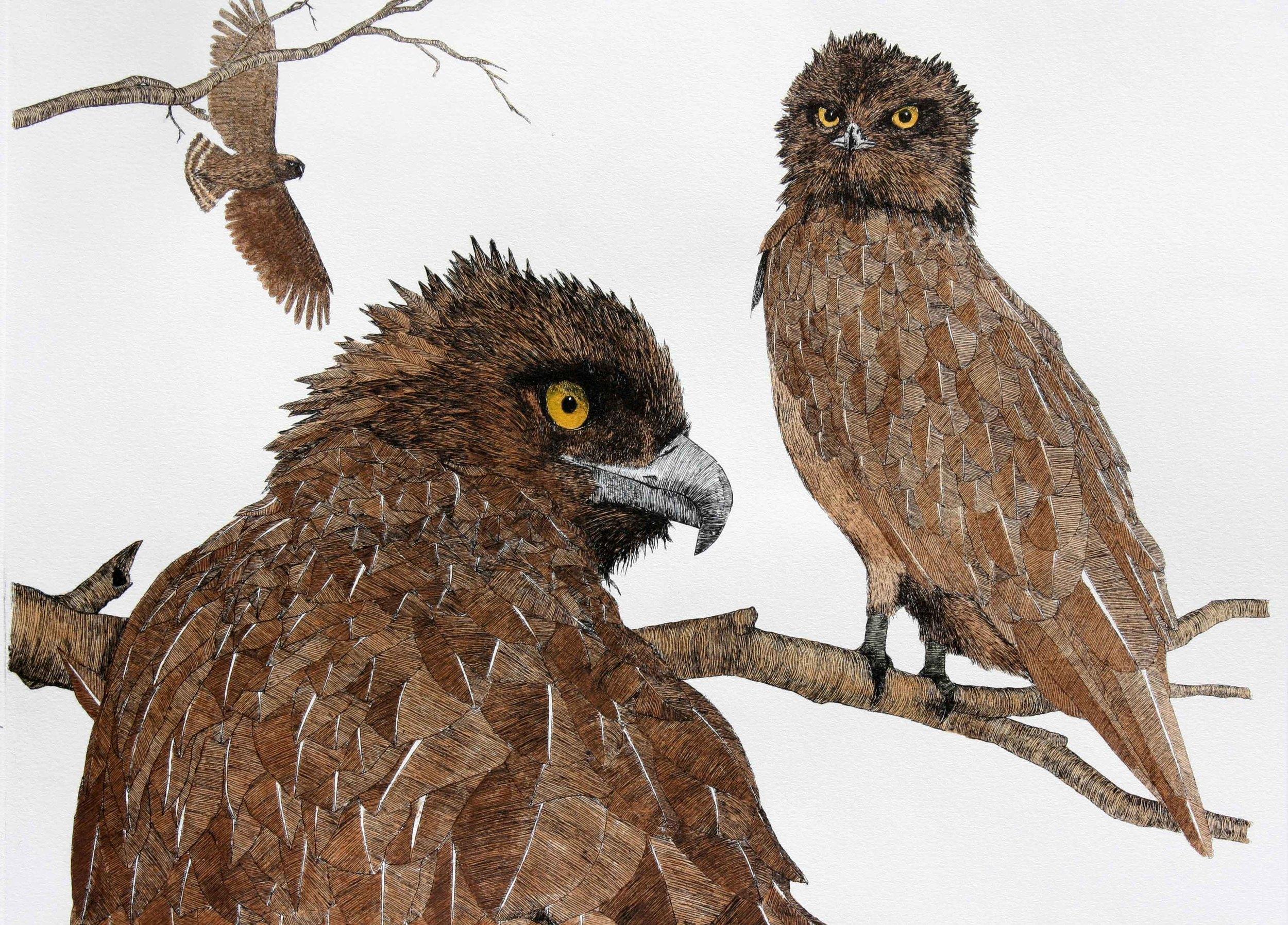 'Brown Snake Eagles'