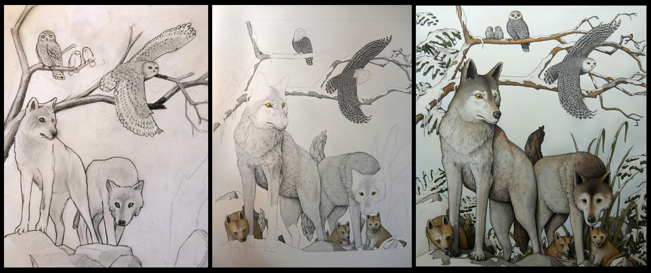'Arctic Wolves and Owls' commission in various stages of completion: sketch, mid way and finally complete.