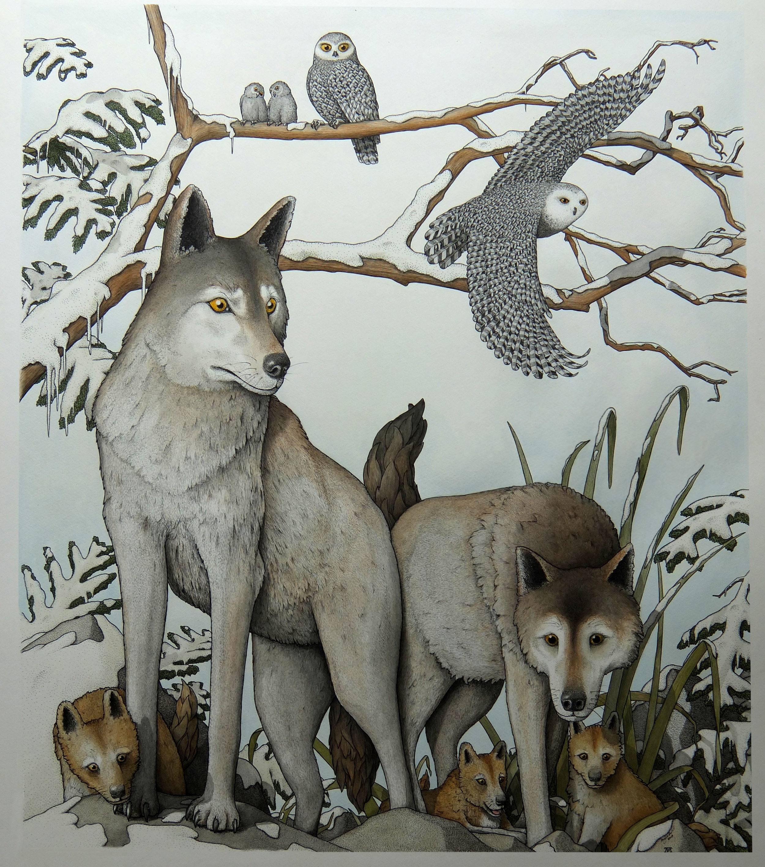 'Arctic Wolves With Snow Owls'