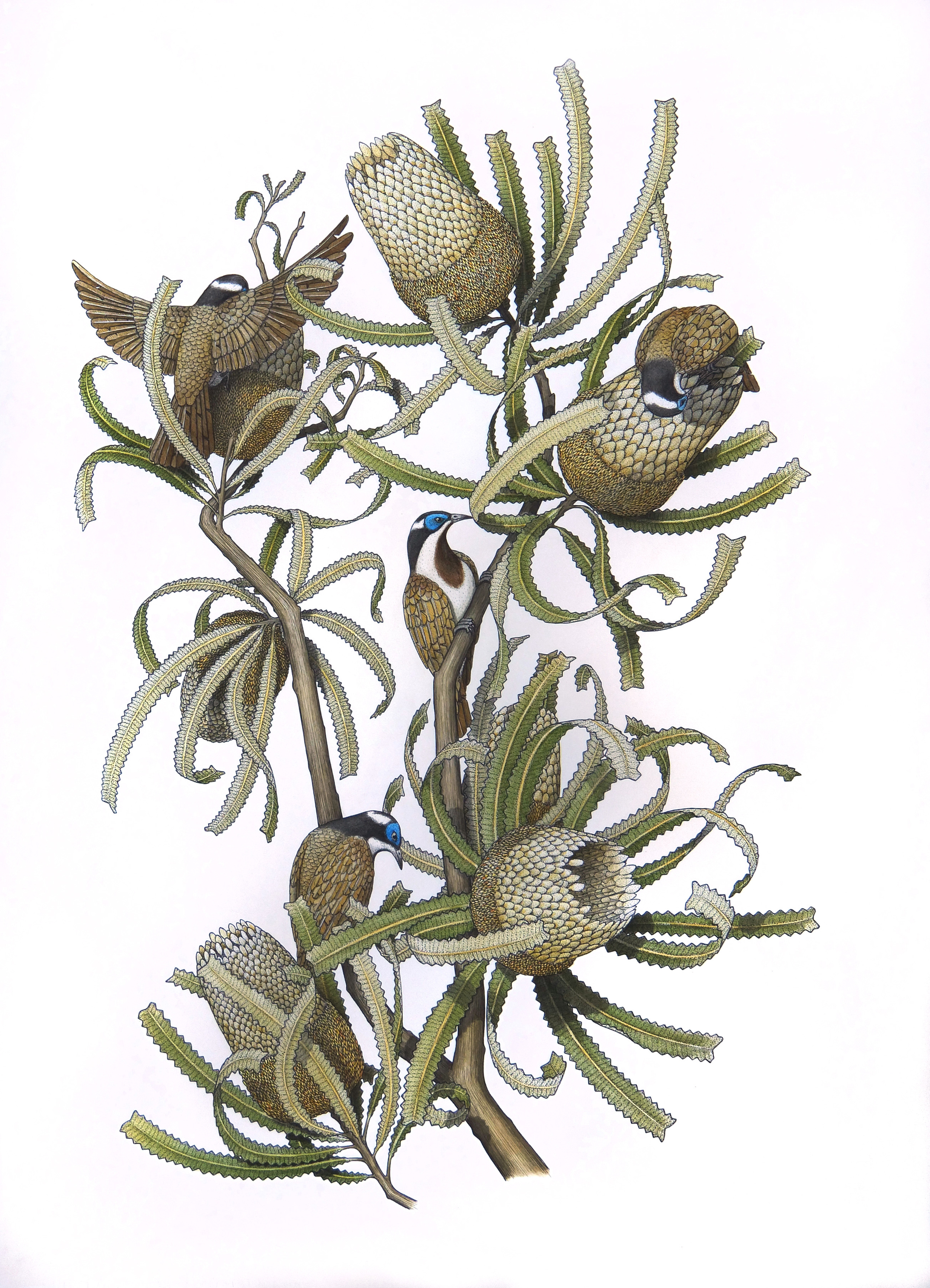 'Banksia with Honeyeaters'