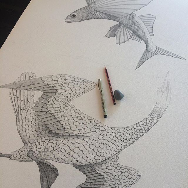 Swimming birds and flying fish all coming together in this big drawing I'm working on. All this detail is done with a pen and when that's all finished I'm going to add some colour over the top with washes of watercolour paint. #drawing #pendrawing #pen #ink #art #fineart #watercolour #watercolor #paint #bird #gannet #fish #flyingfish #birdart #wip #angusfisher