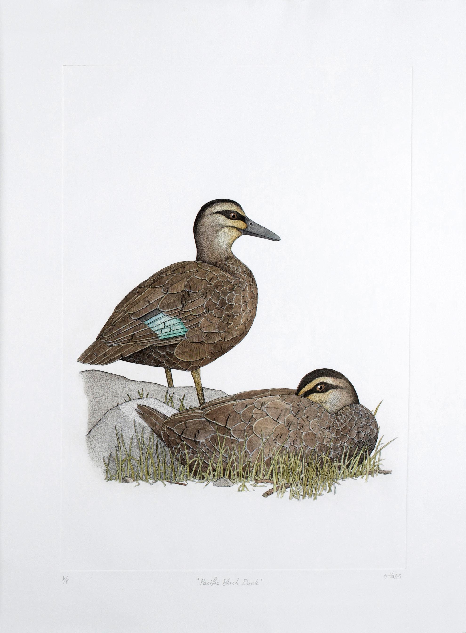 'Pacific Black Duck'