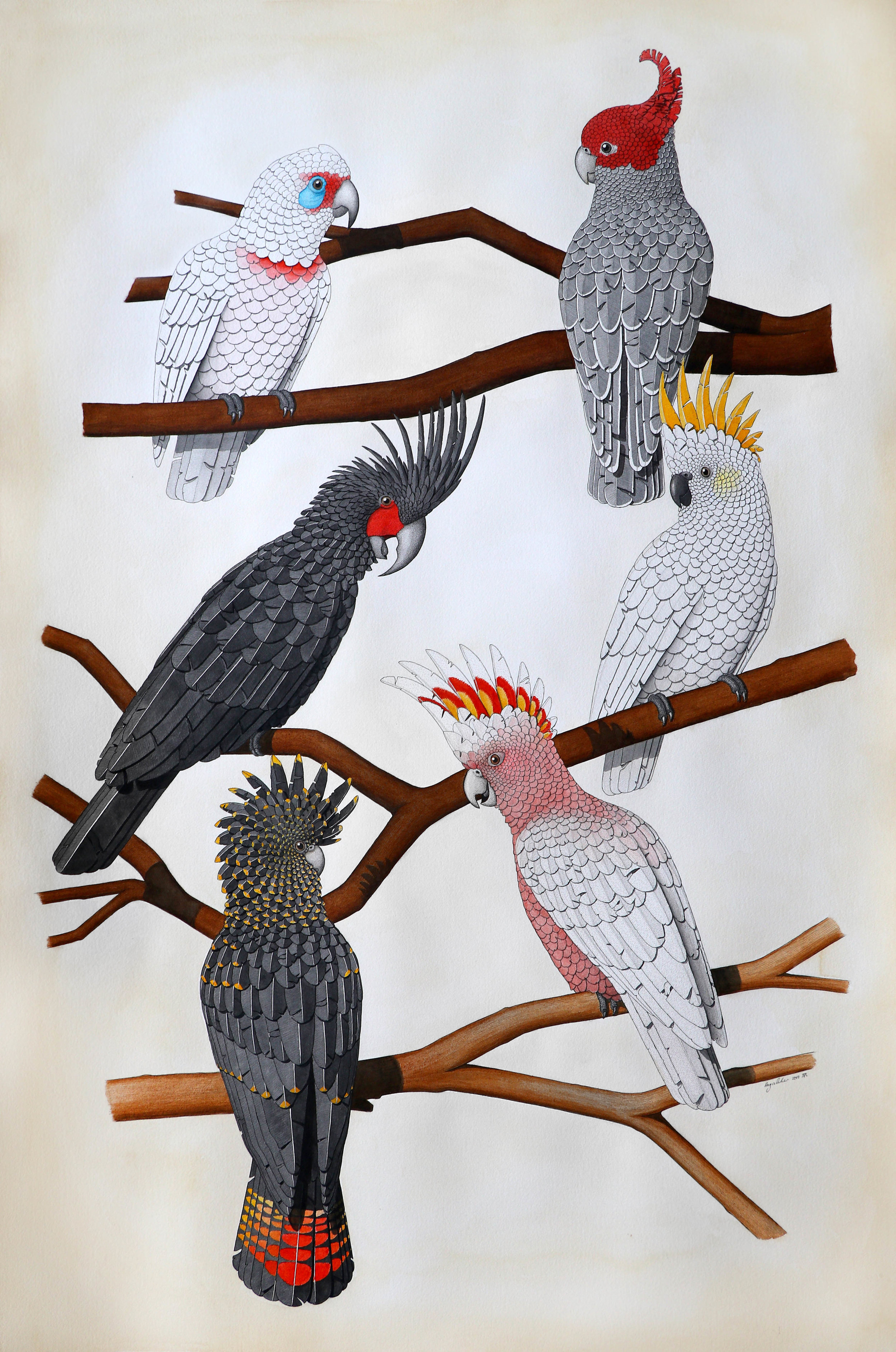 'Australian Cockatoos'