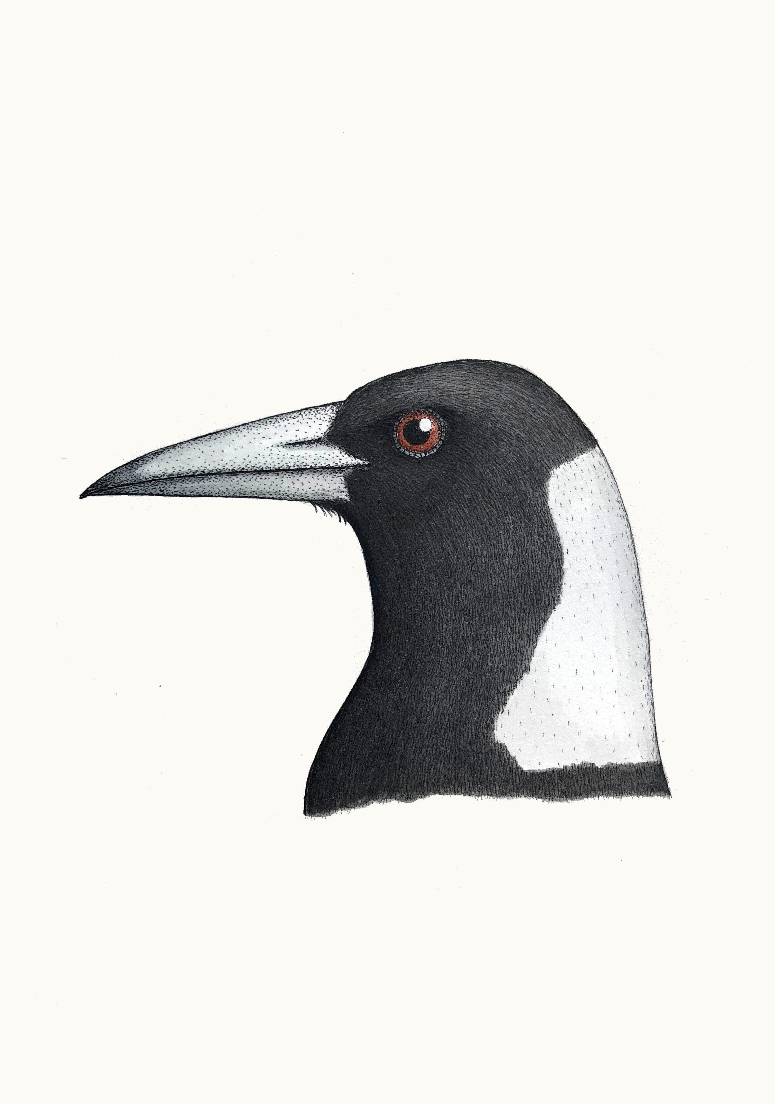'Portrait of an Australian Magpie'