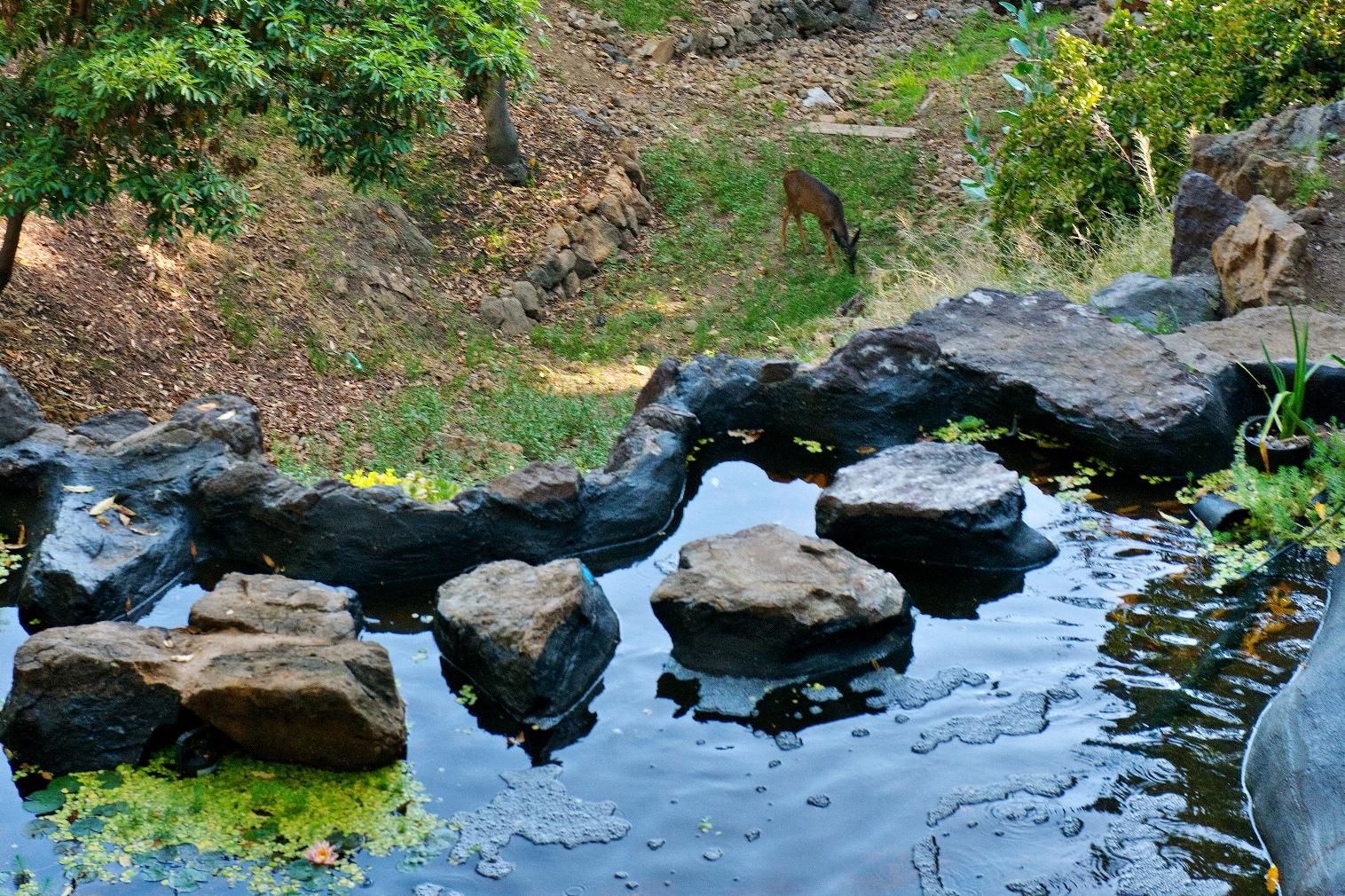 25 Pond Downhill w deer_ss.jpg
