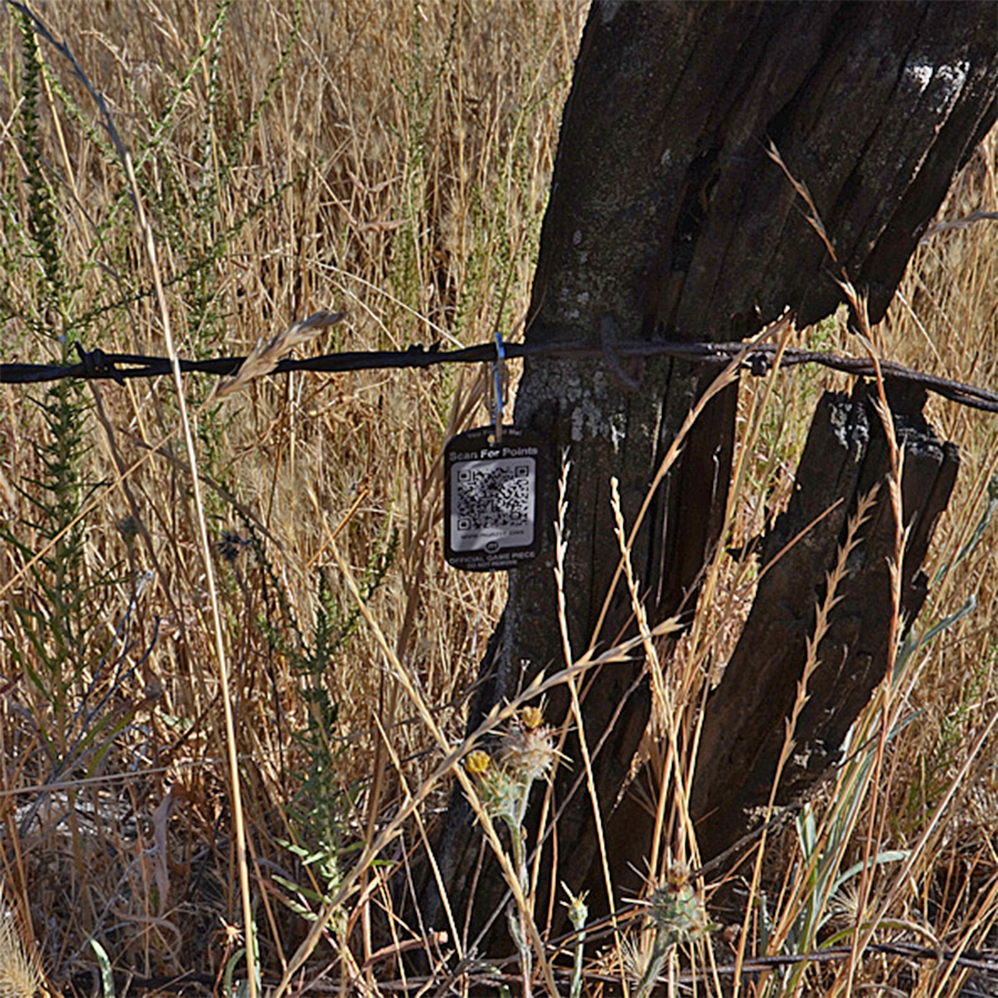 Montezuma, Cal. A dog tag munzee hanging on barbed wire.