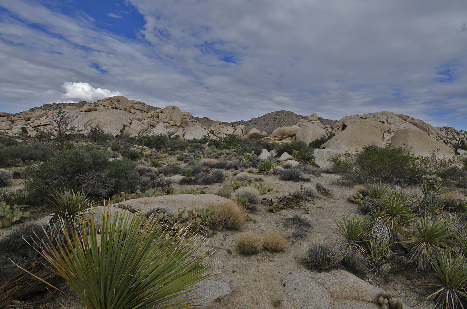 A Desert Plateau