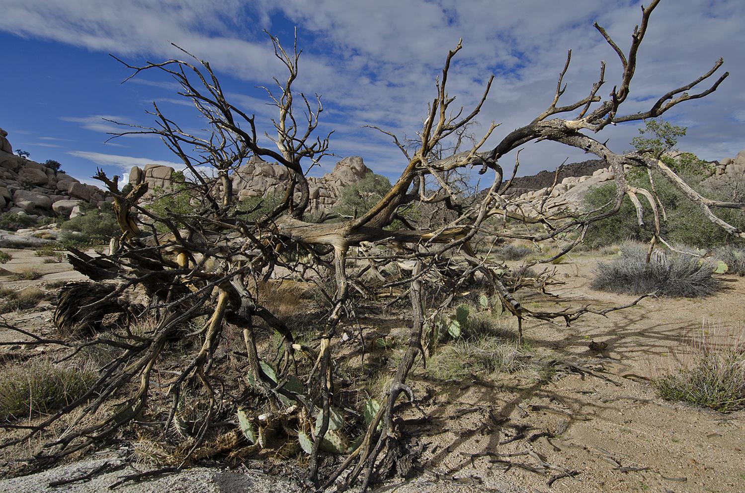 A Dead Tree