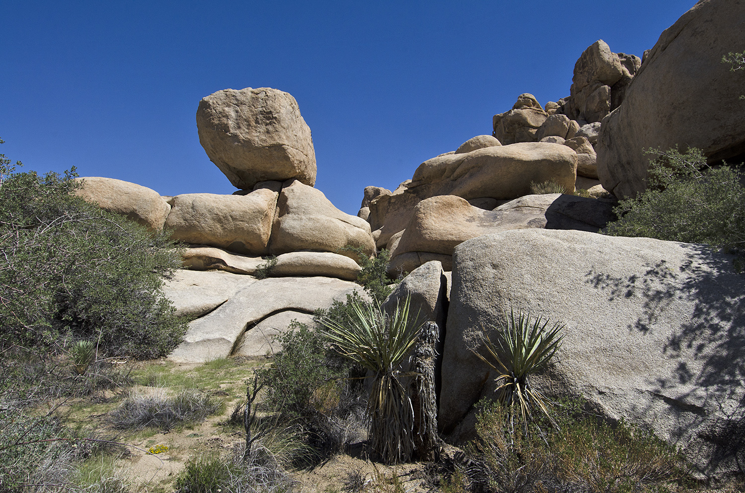 Have you ever noticed how many huge, balanced boulders there are in Joshua Tree?