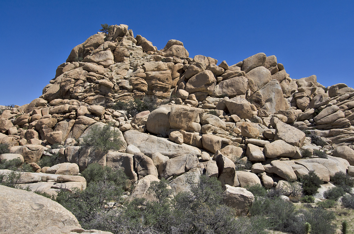 Enormous piles of huge boulders. Did the early inhabitants of Joshua Tree send their kids off looking for places to camp?