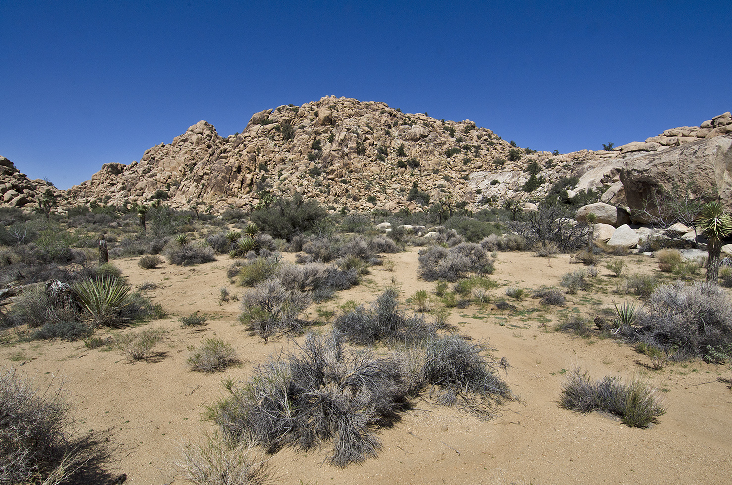 Solitary hiking across the desert, haven't seen a soul since I started the trek.