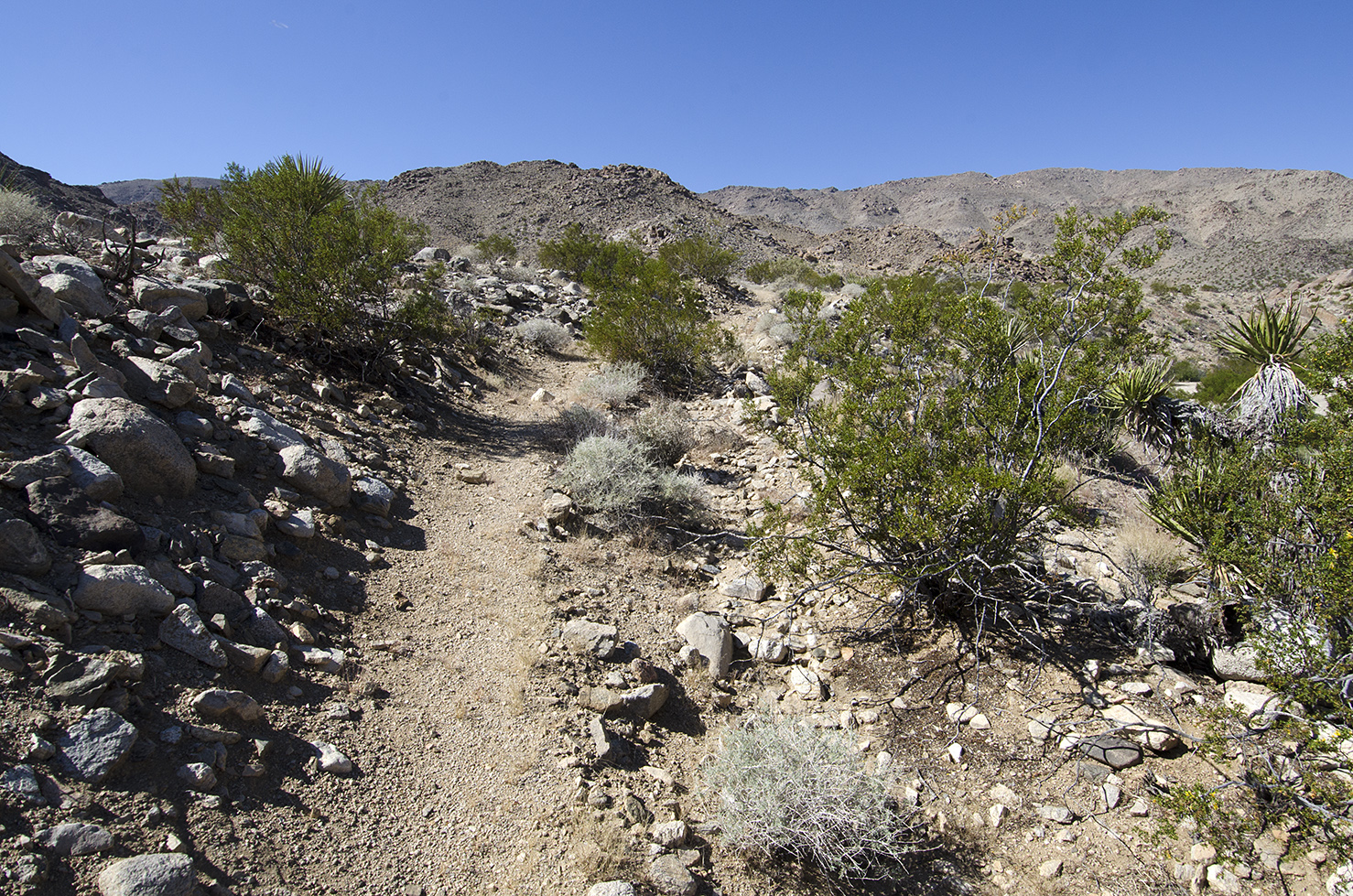 A good view of what alot of the trail will look like from here on out.