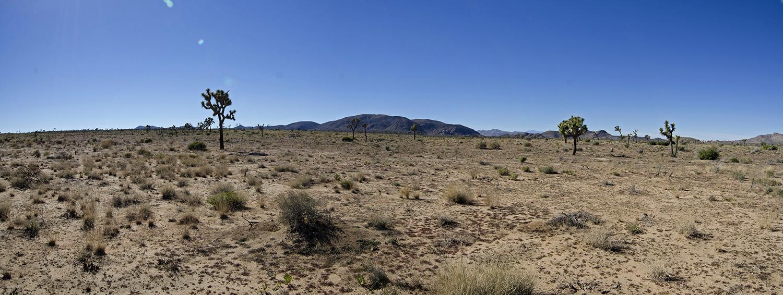 Queen Valley