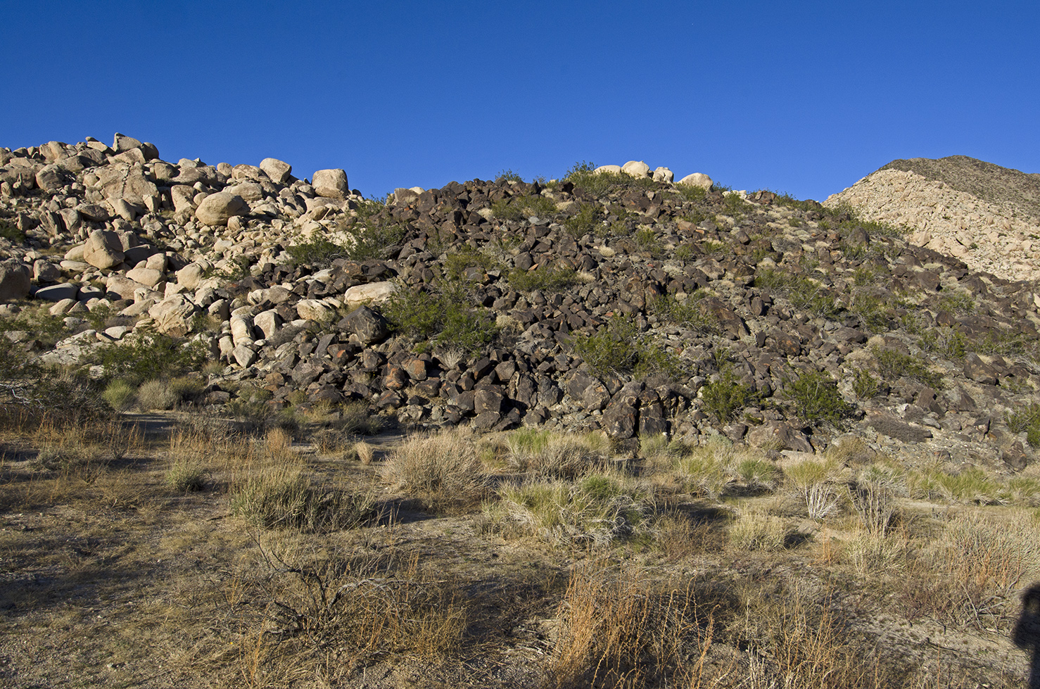 This is the pile of dark rocks that holds the petroglyphs.