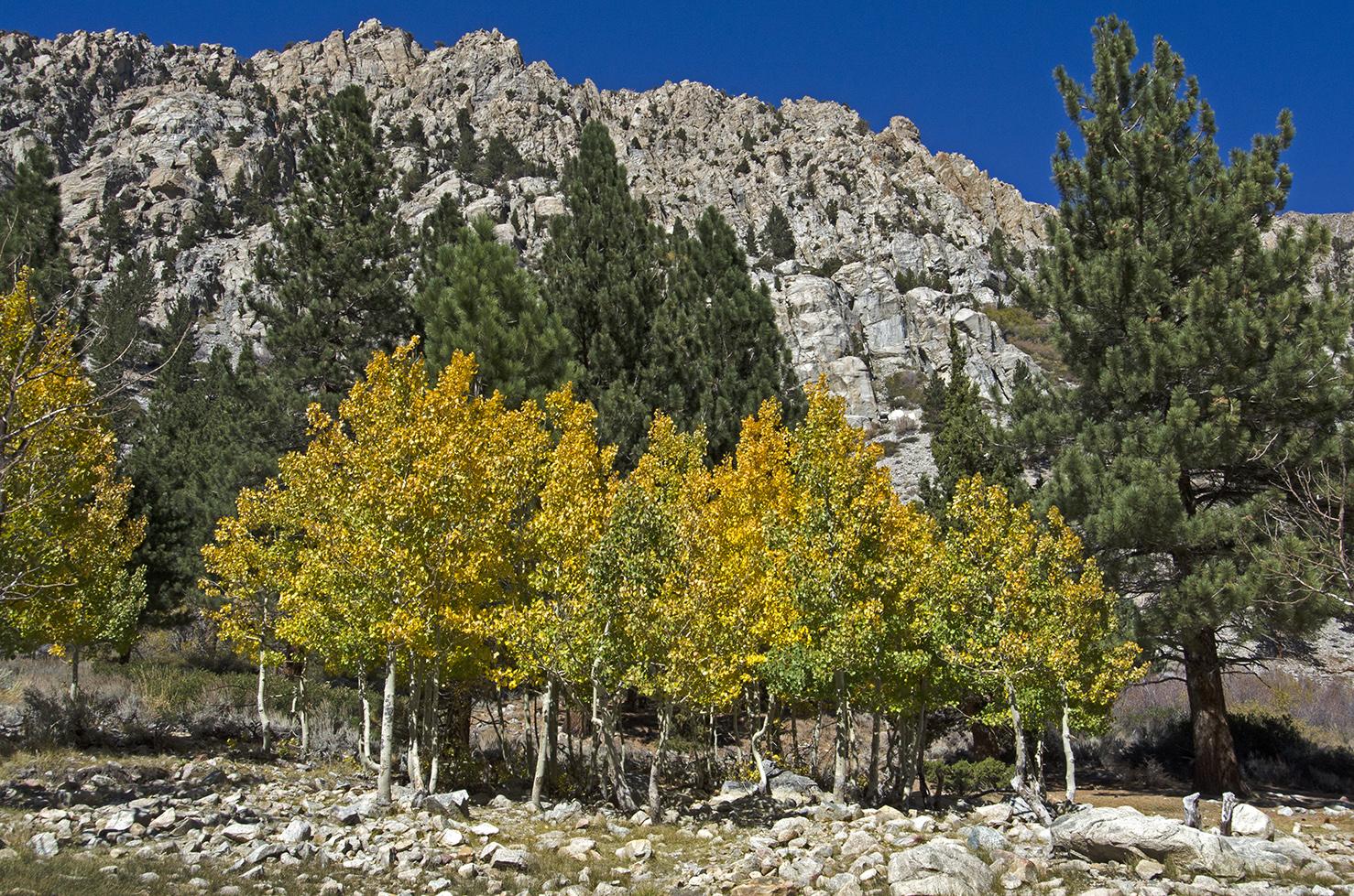 Lundy Canyon 02.jpg