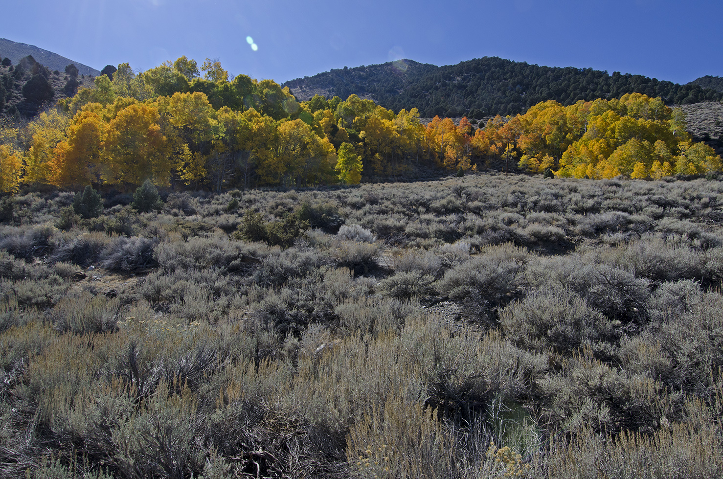 Lundy Canyon 03.jpg