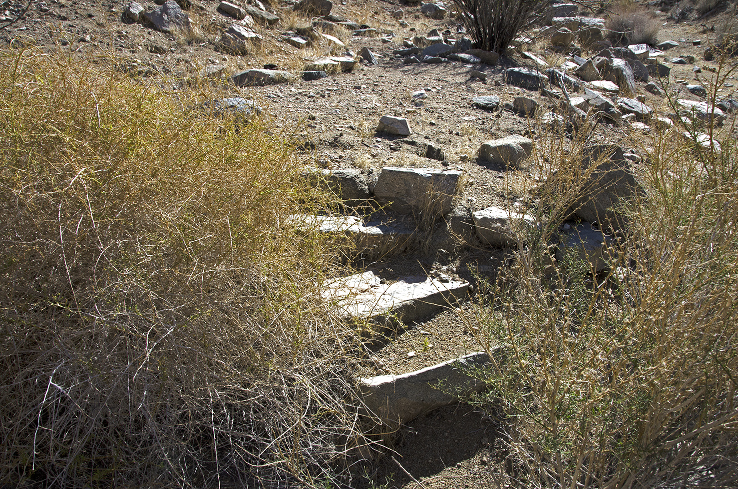 Who placed these stone steps here? Did they just lead to the small, flat level area? Was it someone's home?