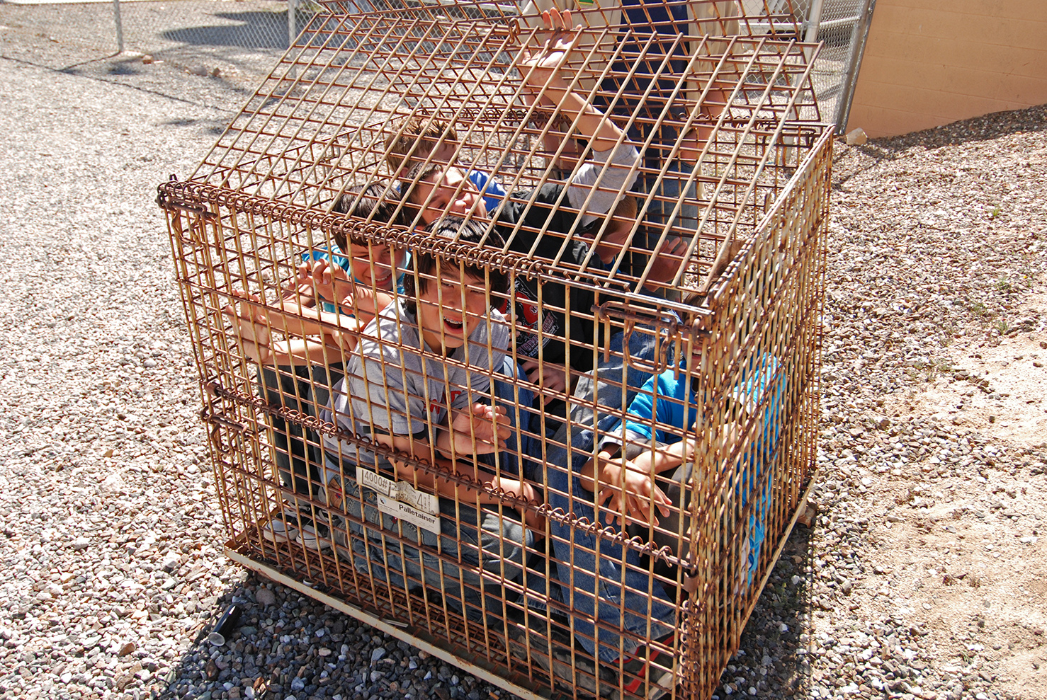 How many scouts can you fit inside a big iron cage/box you find in the desert?