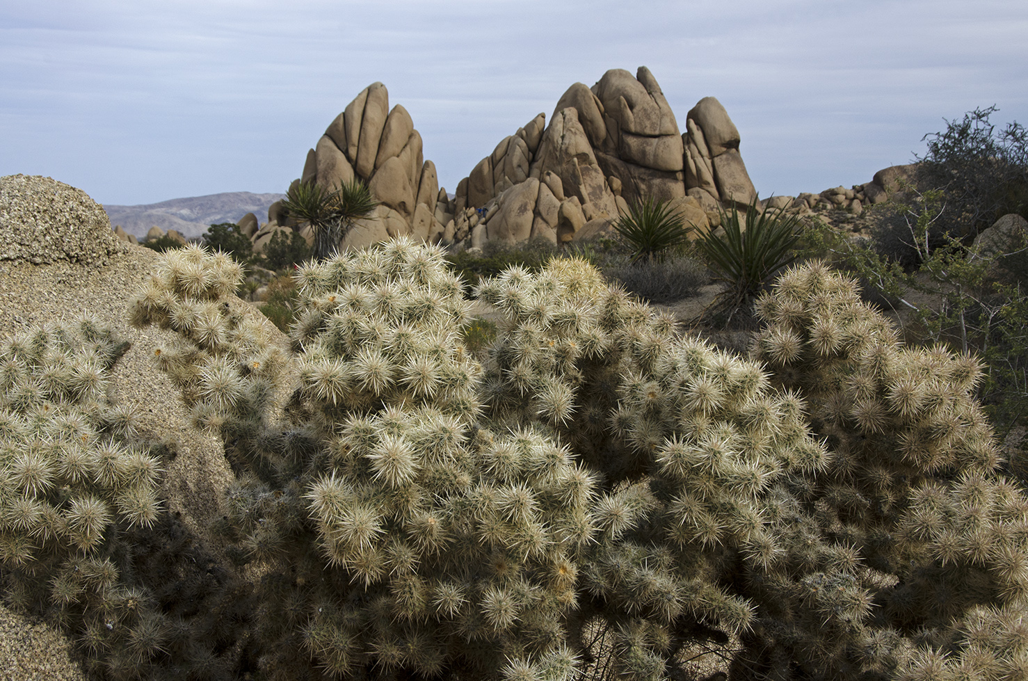 Skull Rock Trail - Joshua Tree NP 08