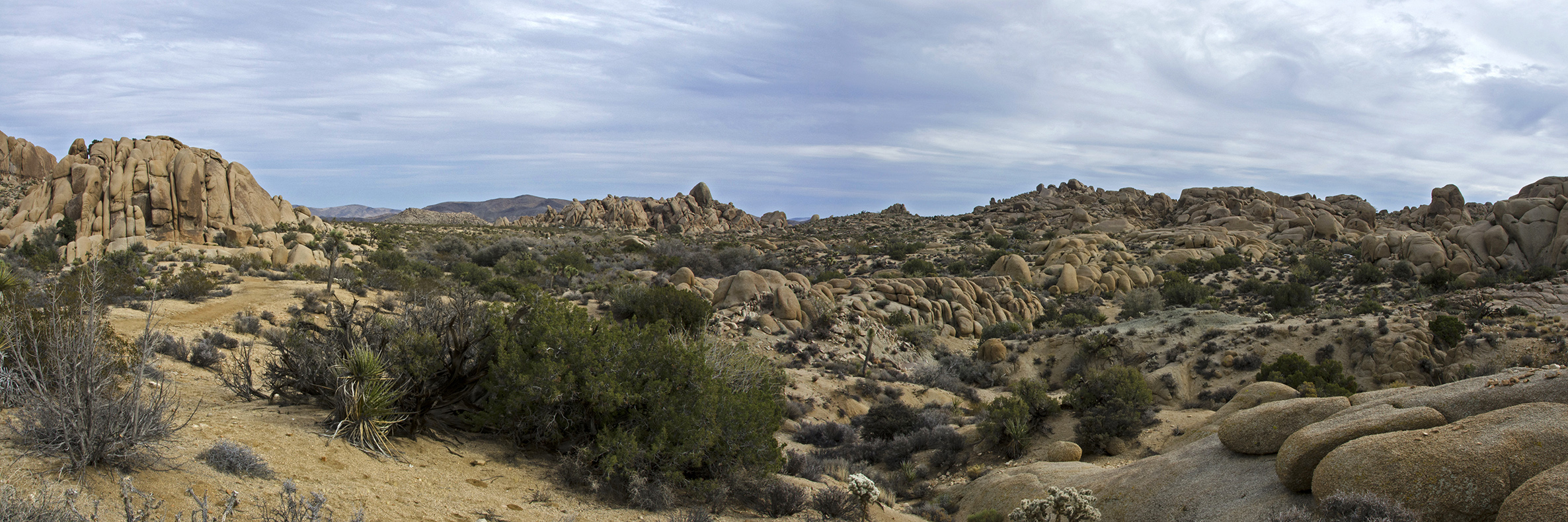 Skull Rock Trail - Joshua Tree NP 20
