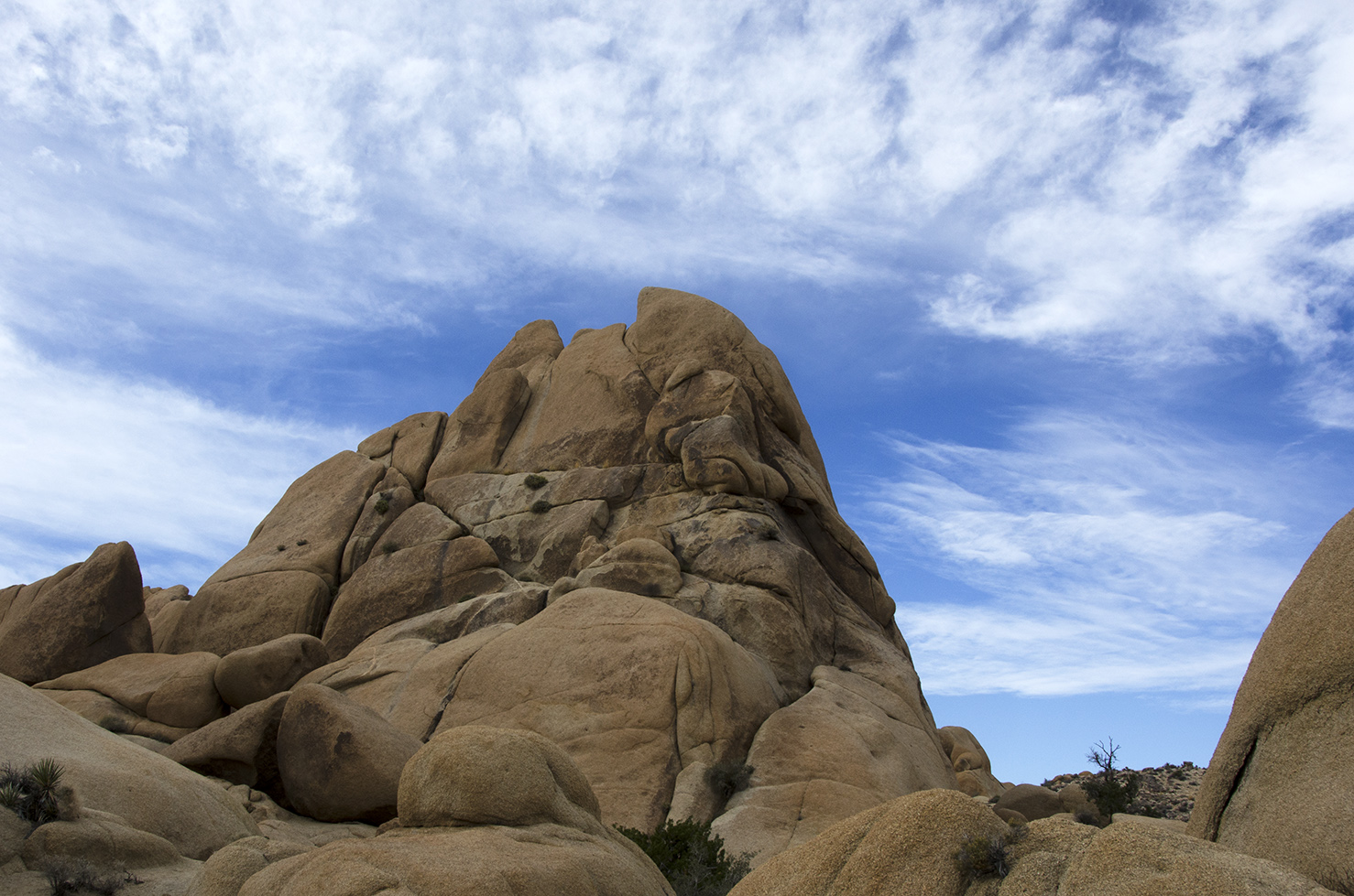 Skull Rock Trail - Joshua Tree NP 23