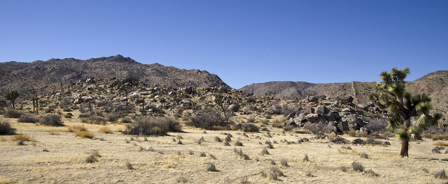 Samuelsons Rocks - Joshua Tree NP - 16.jpg