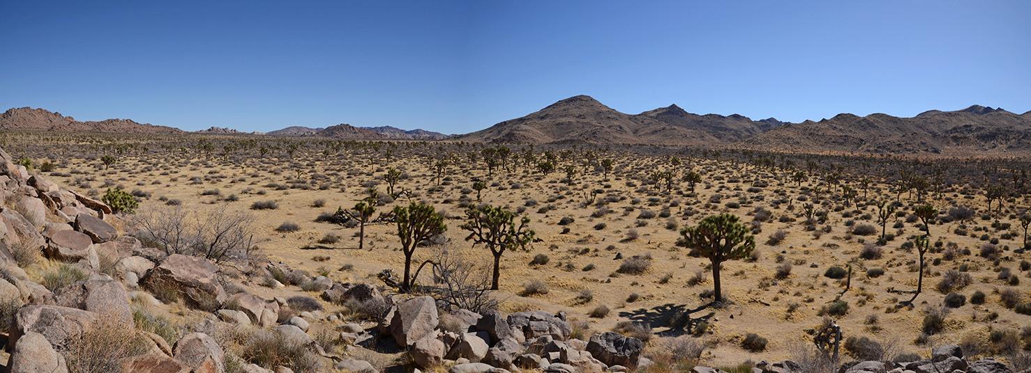 Samuelsons Rocks - Joshua Tree NP - 25pano.jpg