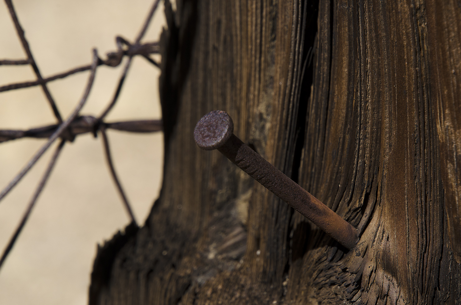 Samuelsons Rocks - Joshua Tree NP - 35.jpg