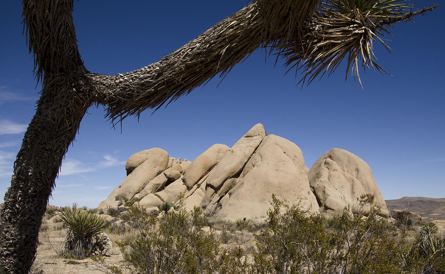 Henhouse - Joshua Tree NP 08 Fugly Rock.jpg