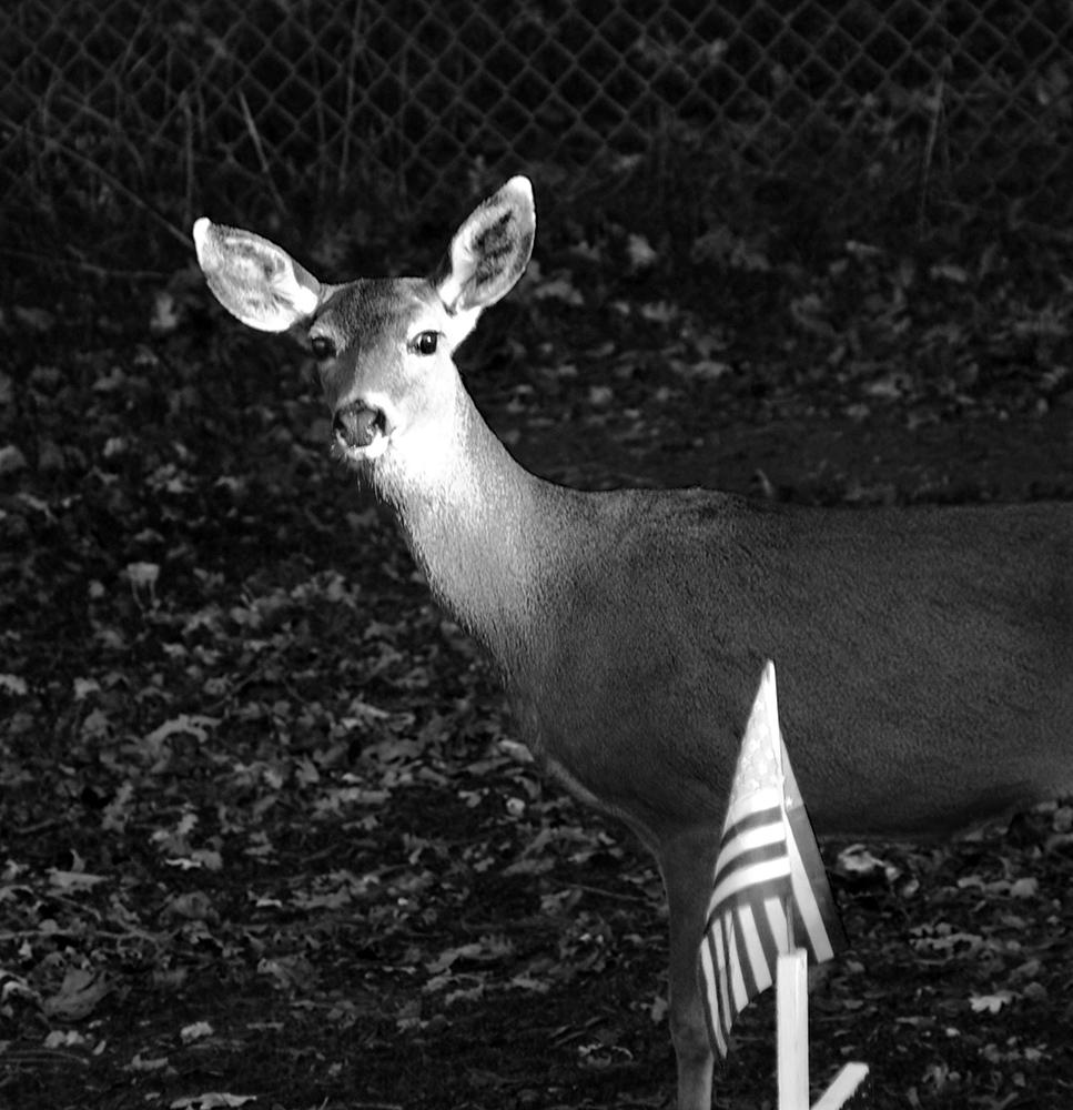 Columbia Cemetery Deer.jpg